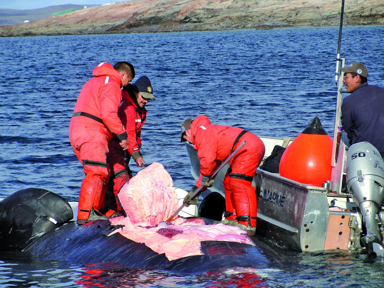Polowanie na wieloryba