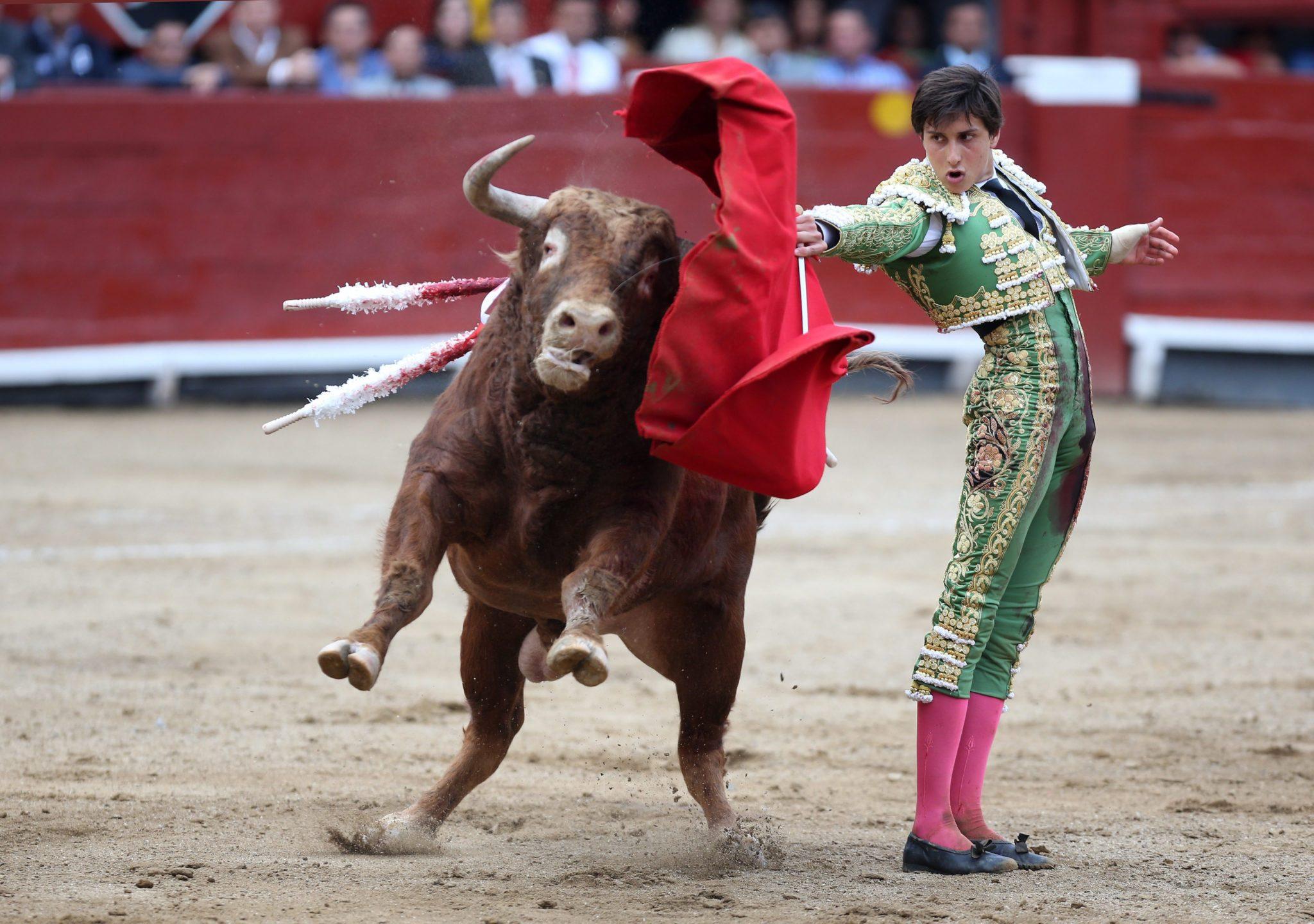 Peru: walki byków w Limie (foto. PAP/EPA/ERNESTO ARIAS)
