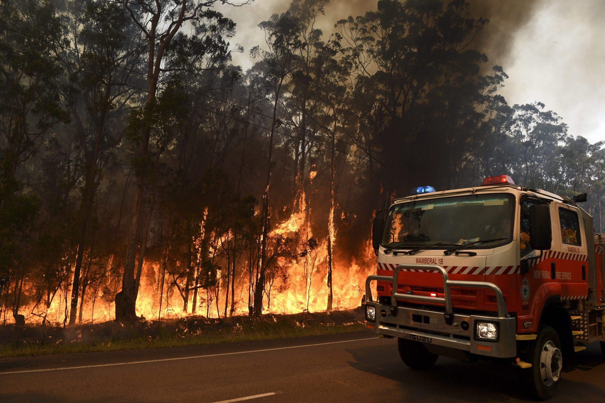 Australia: pożar lasów w Południowej Nowej Walii (foto. PAP/PAP/EPA/DAN HIMBRECHTS)