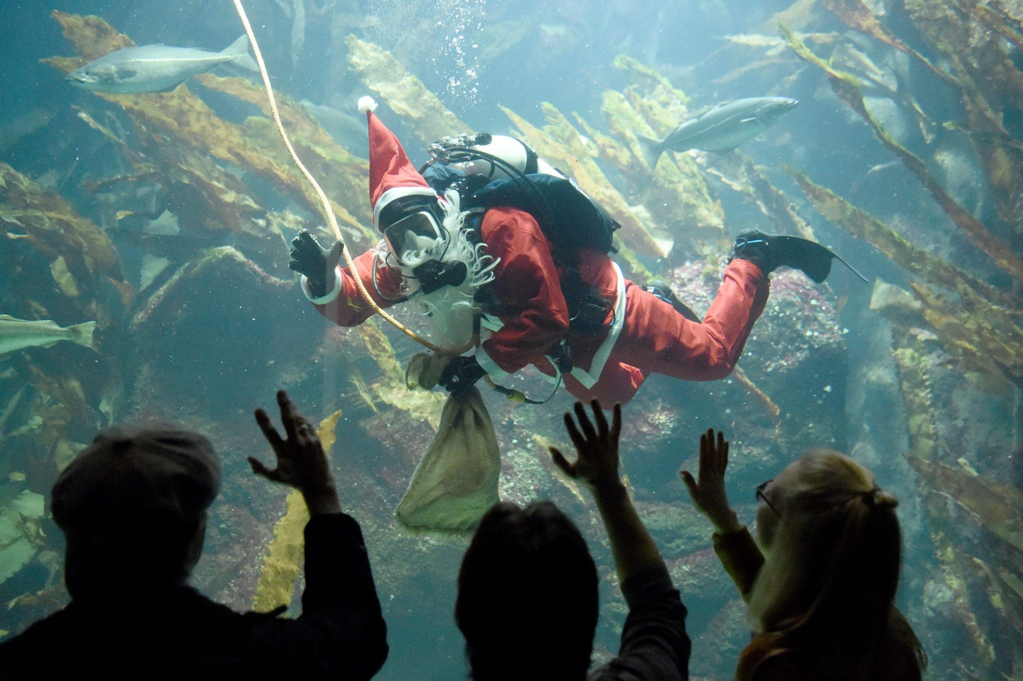 Niemcy: nurkujący krasnal Mikołaj w oceanarium w Toenning (foto. PAP/EPA/CARSTEN REHDER)