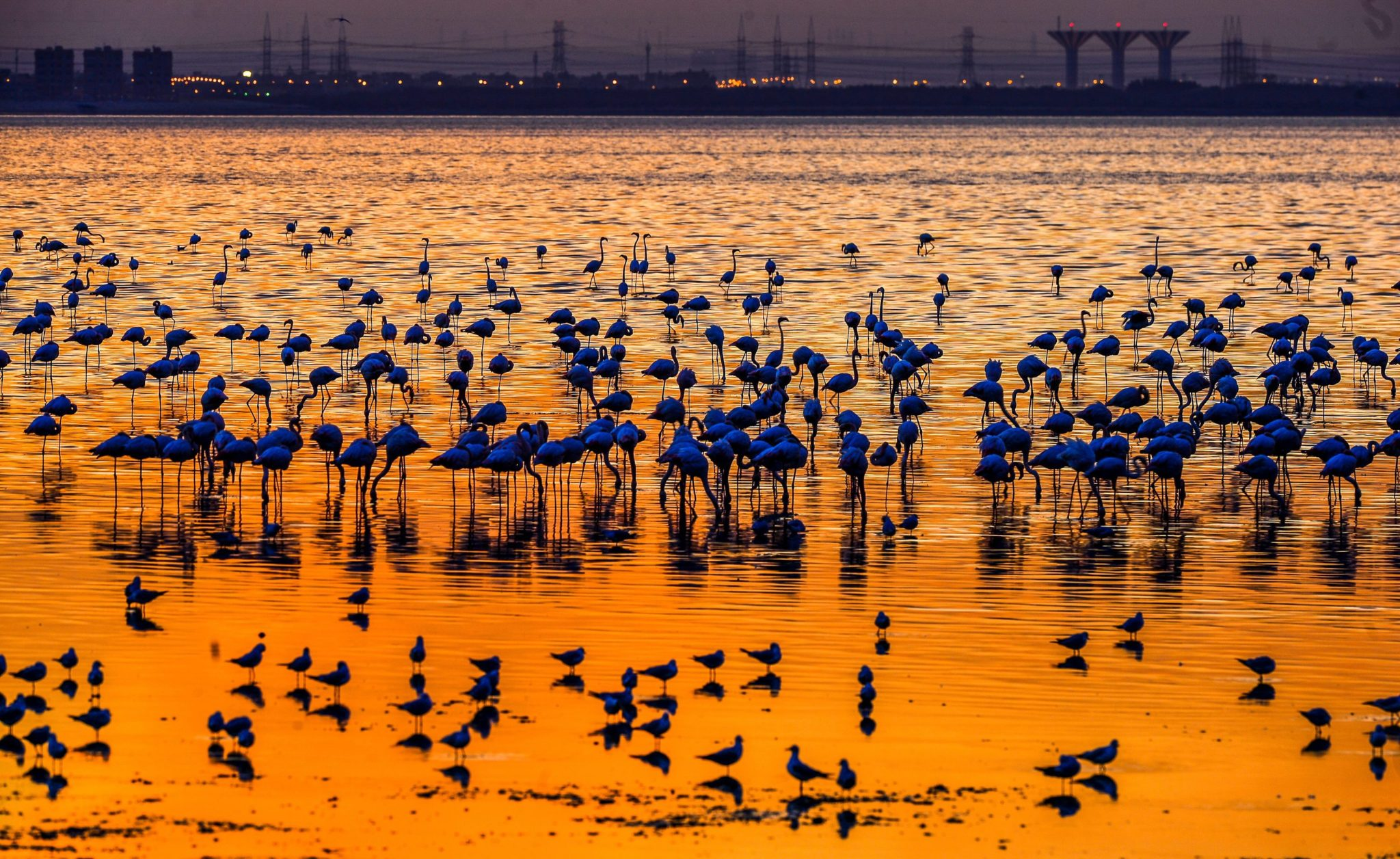 epa05681954 A photo made available on 19 December 2016 of a flock of flamingos and other birds gathering at the seaside with the silhouette of the nearby metropole in background during a colorful sunset in Kuwait City, Kuwait, 18 December 2016 evening.  EPA/RAED QUTENA Dostawca: PAP/EPA.