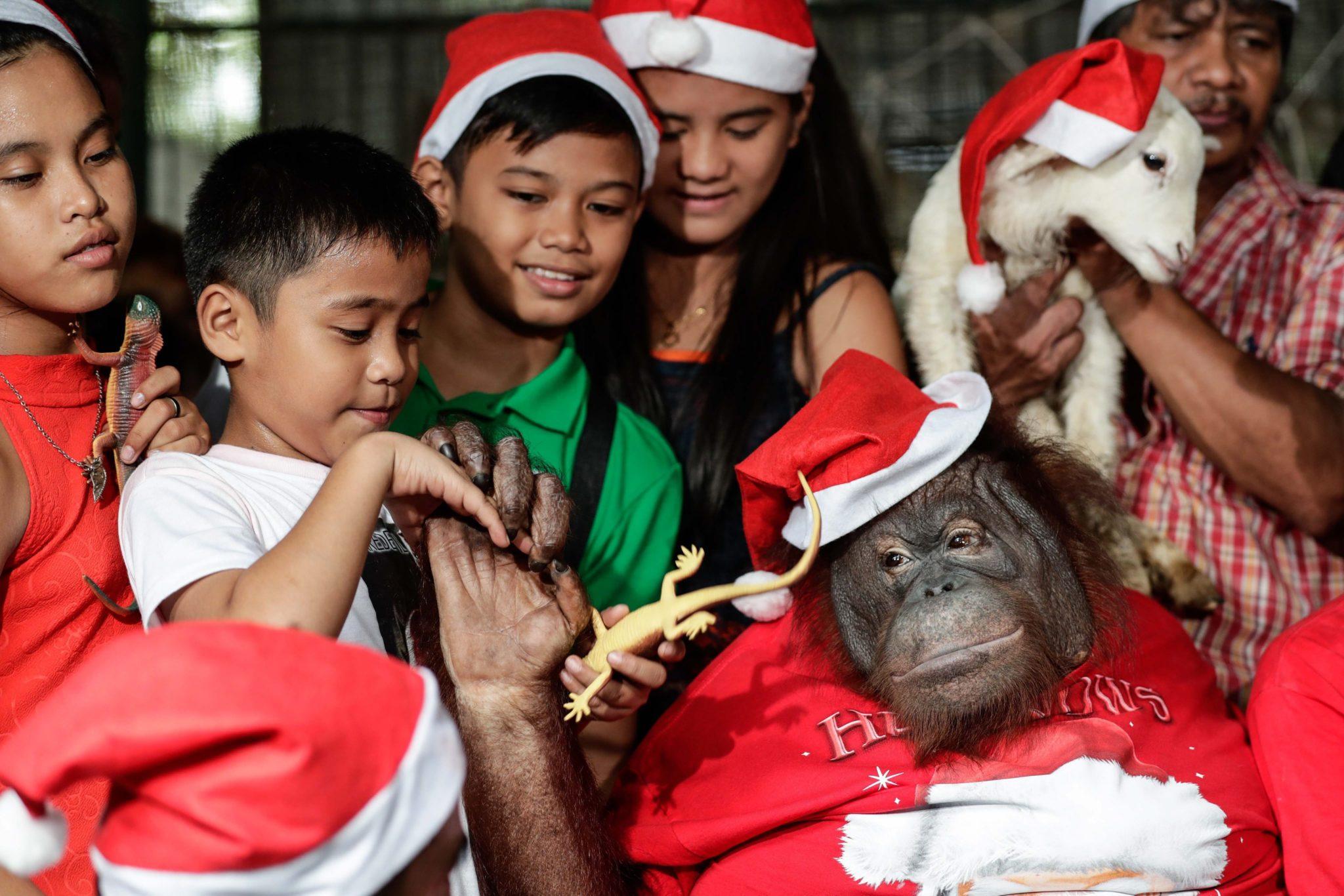 Filipiny: świąteczna impreza dla zwierzą w Malabon Zoo w Manili (foto. PAP/EPA/MARK R. CRISTINO)