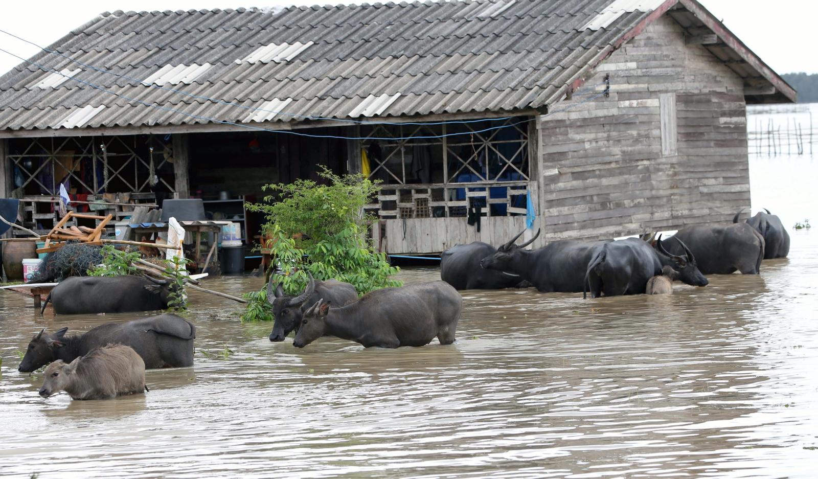 Powodzie w Tajlandii.  Fot. PAP/EPA/STR THAILAND OUT