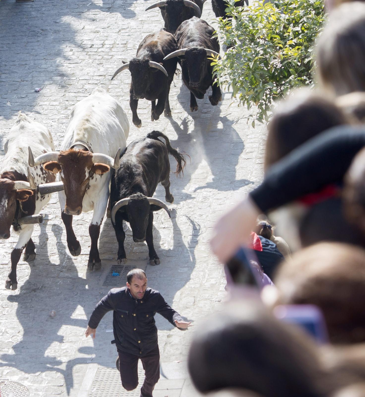 Festiwal San Sebastian - gonitwa byków w La Puebla del Rio, w Hiszpanii. Fot. PAP/EPA/RAUL CARO