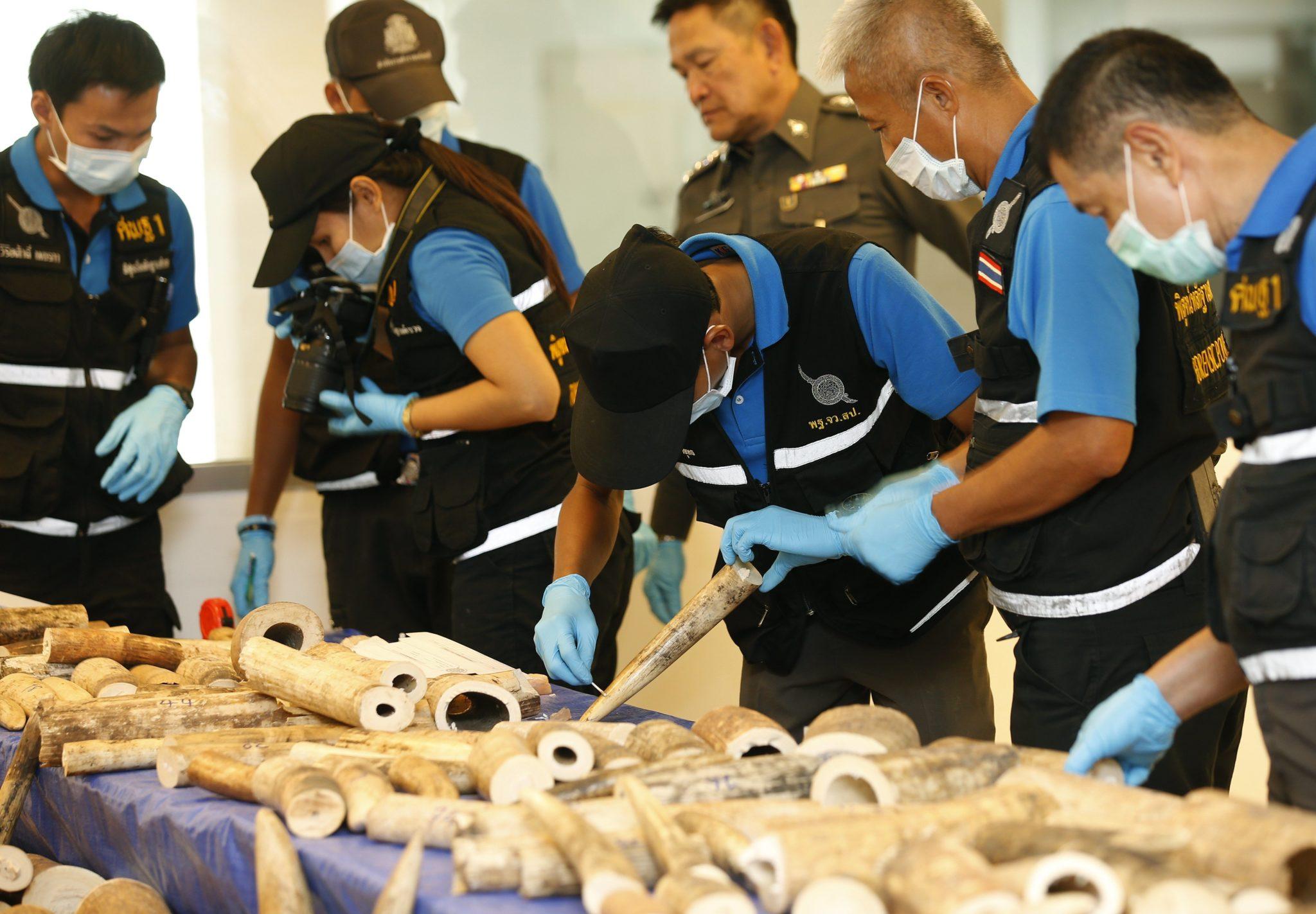 Tajlandia: tajska straż graniczna udaremniła przemy kości słoniowej na lotnisku w Bangkoku (foto. PAP/EPA/NARONG SANGNAK )