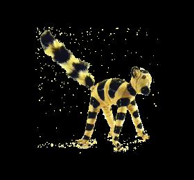 lemur_tata