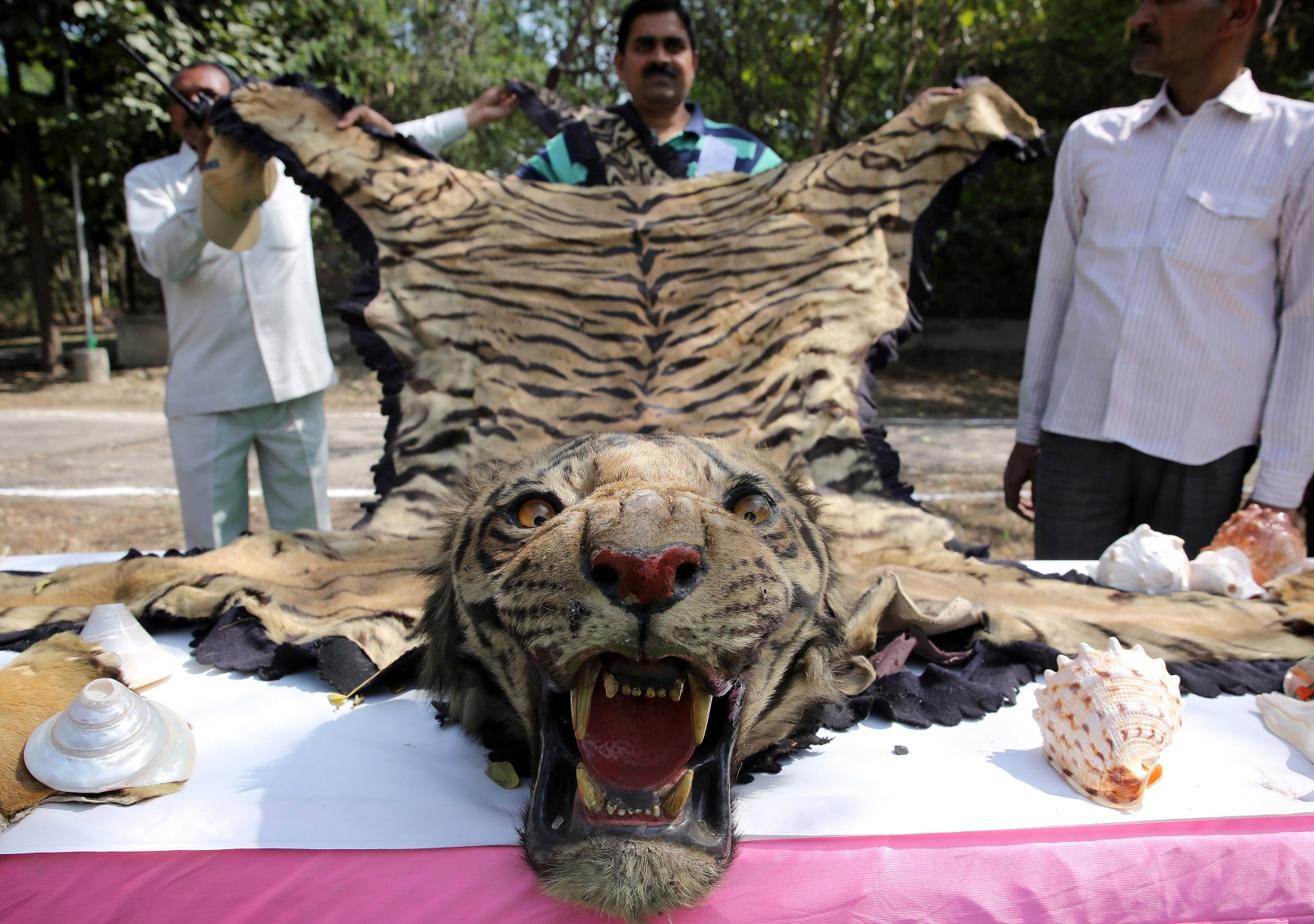 Światowy Dzień Dzikiej Przyrody. Fot. PAP/EPA/RAJAT GUPTA