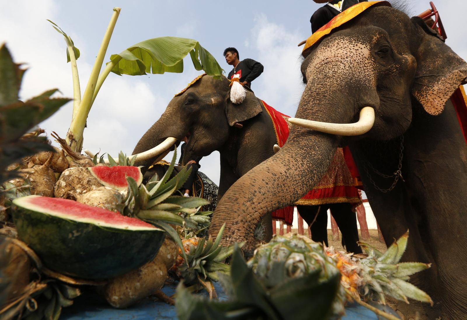 Dzień Słonia w Tajlandii. Fot. PAP/EPA/NARONG SANGANK