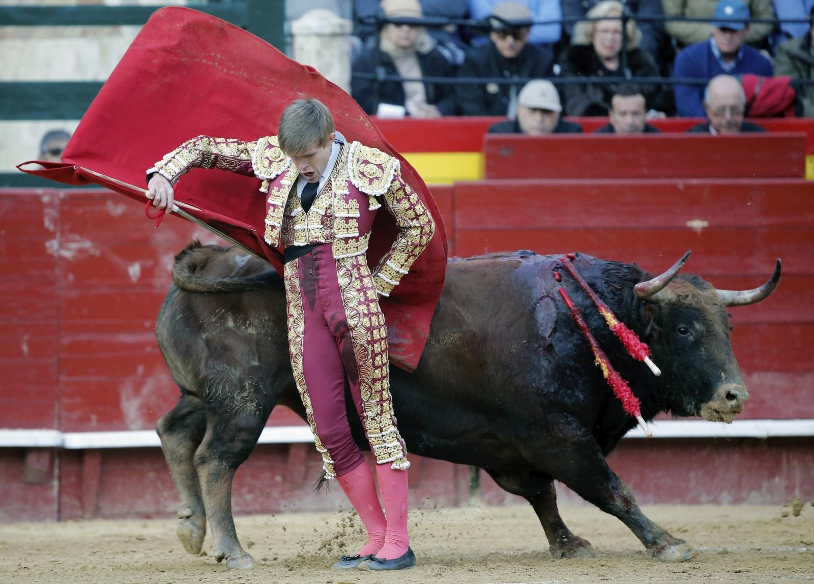 Hiszpański torreador Javier Jimenez mierzy się ze swoim pierwszym bykiem w czasie Święta Ognia, Walencja, Hiszpania.