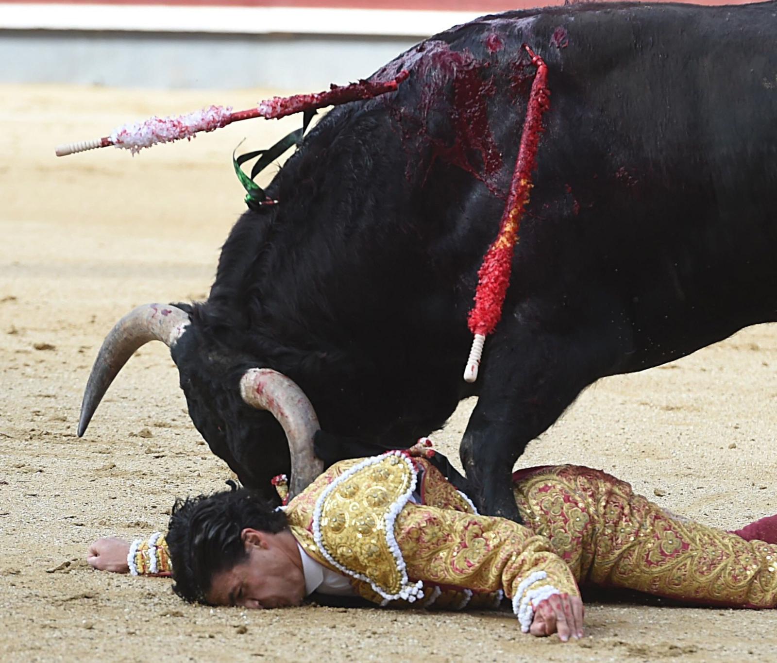 Hiszpański torreador chwilę przed nadzianiem przez byka, Madryt, Hiszpania.
