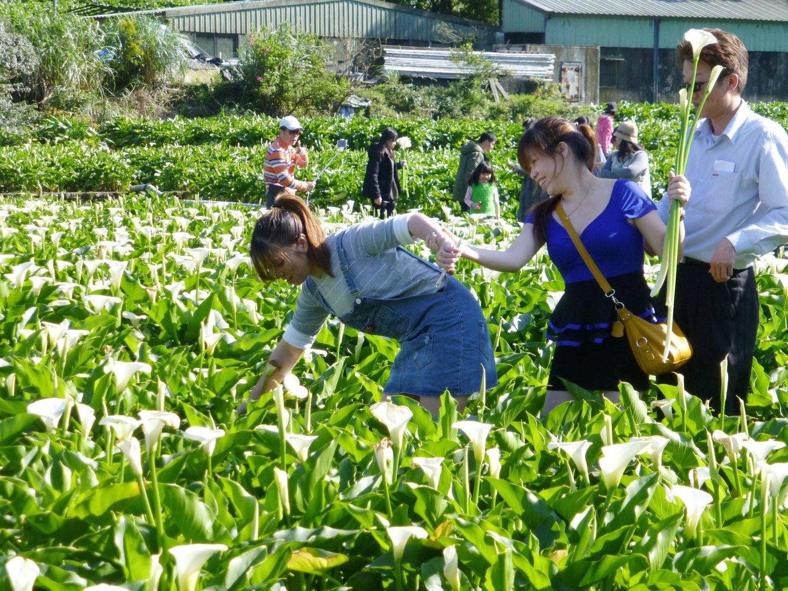 Ludzie zbierają lilie w czasie Festiwalu Lilii w Tajpej, Tajwan.