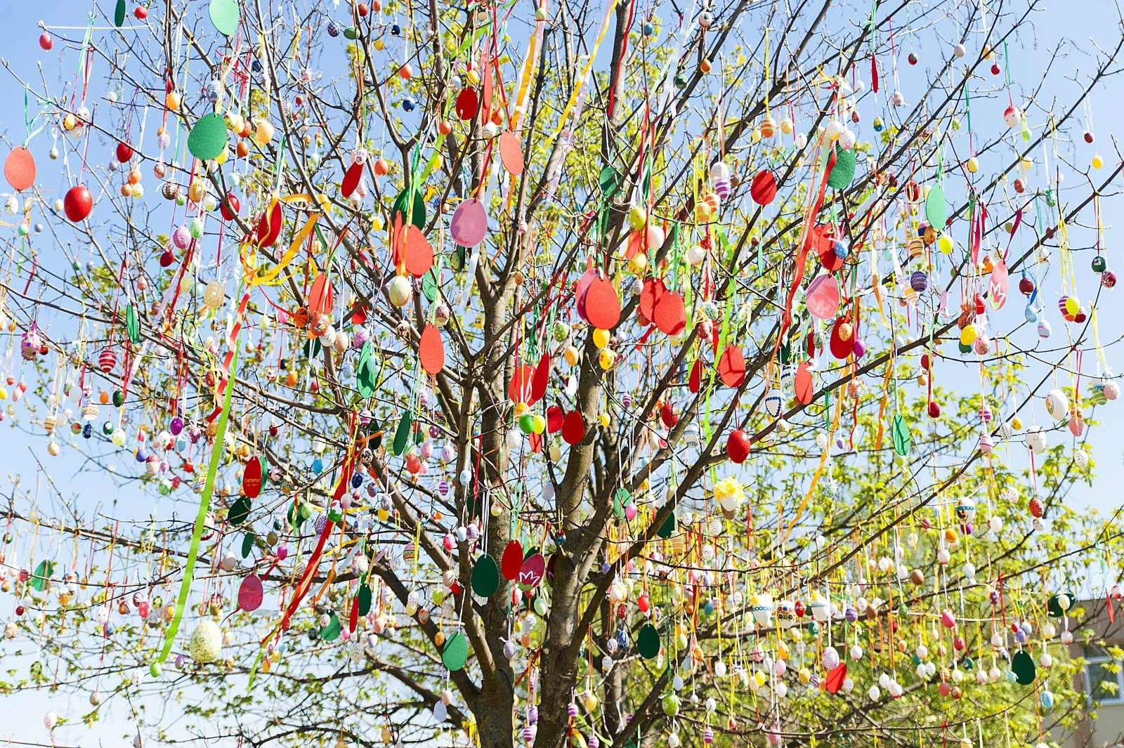 Drzewo ozdobione 1600 pisankami w Csallokozcsutortok na Słowacji.