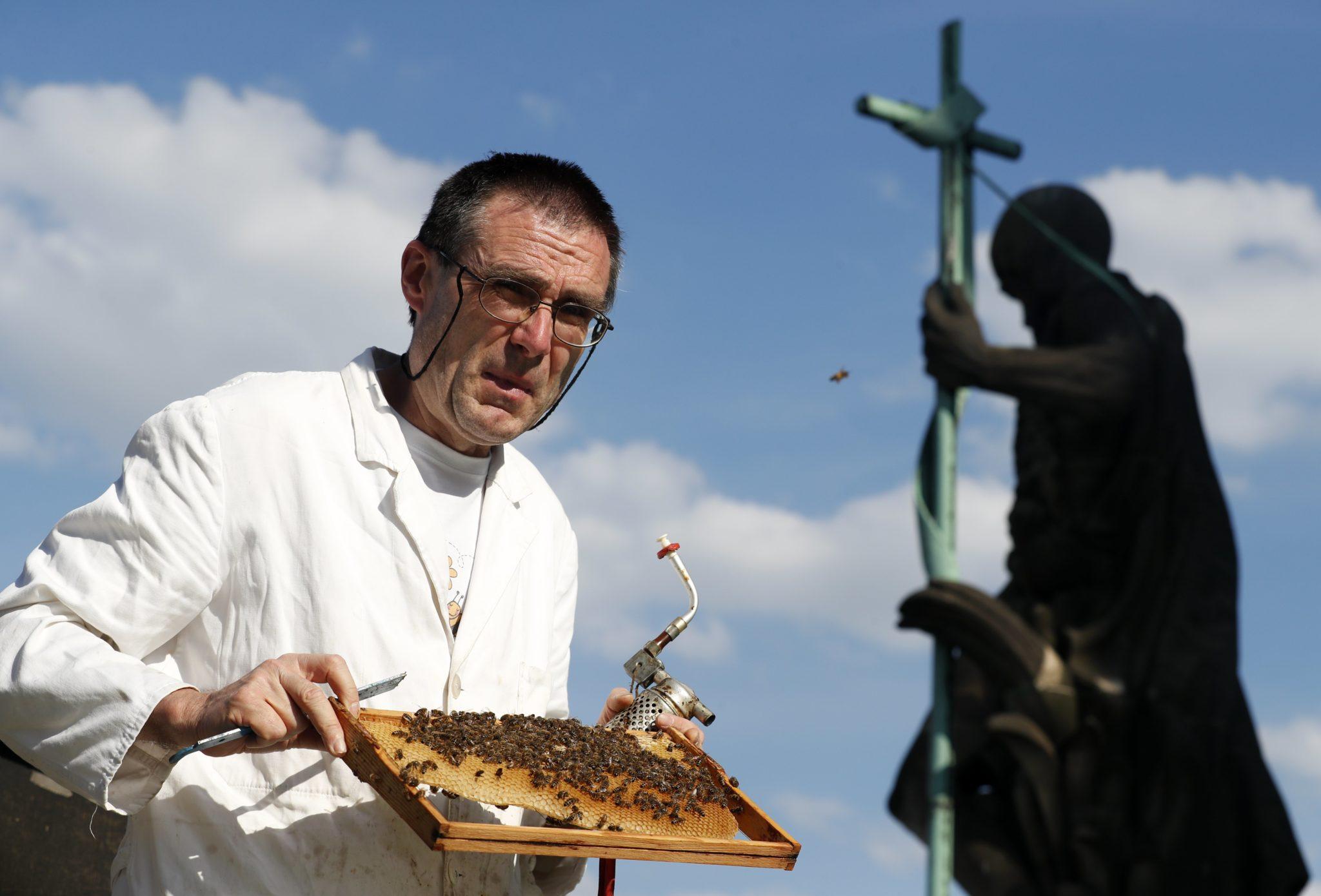 Niemcy: pasieka na dachu berlińskiej katedry (foto. PAP/EPA/FELIPE TRUEBA)
