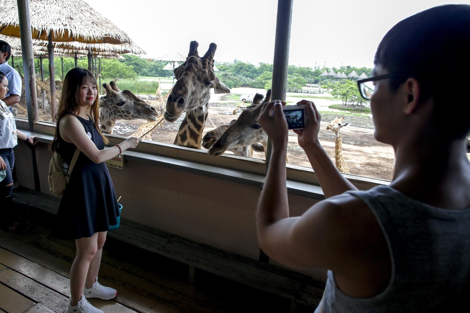 Tajlandia. Karmienie żyraf. fot. EPA/DIEGO AZUBEL