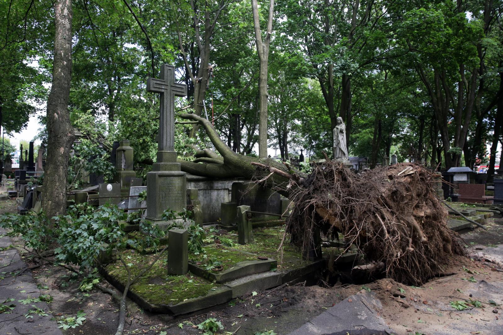 Zniszczenia na warszawskim Cmentarzu Powązkowskim spowodowane przez wichurę, która 29 czerwca br. przeszła przez stolicę. Fot. PAP/Tomasz Gzell