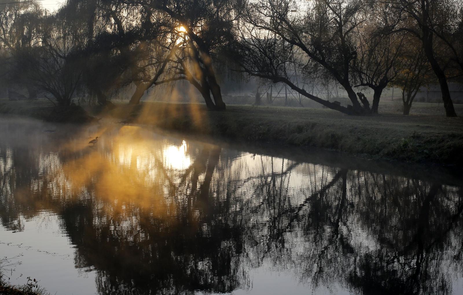 Drzewa odbijają się w najdłuższym w Południowej Afryce strumieniu nazywanym w języku afrikaans Braamfontein Spruit, czyli Wiosna Cierni.