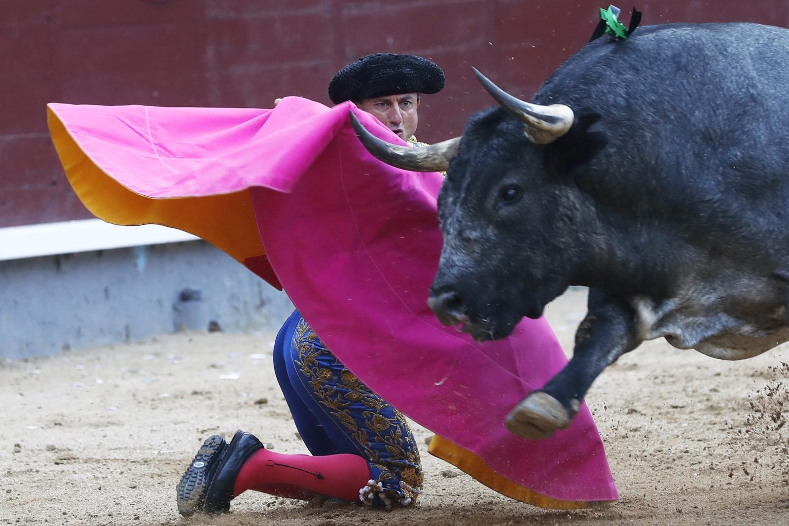 Hiszpański torreador Rafael Rubio w trakcie walki z bykiem, Madryt, Hiszpania.
