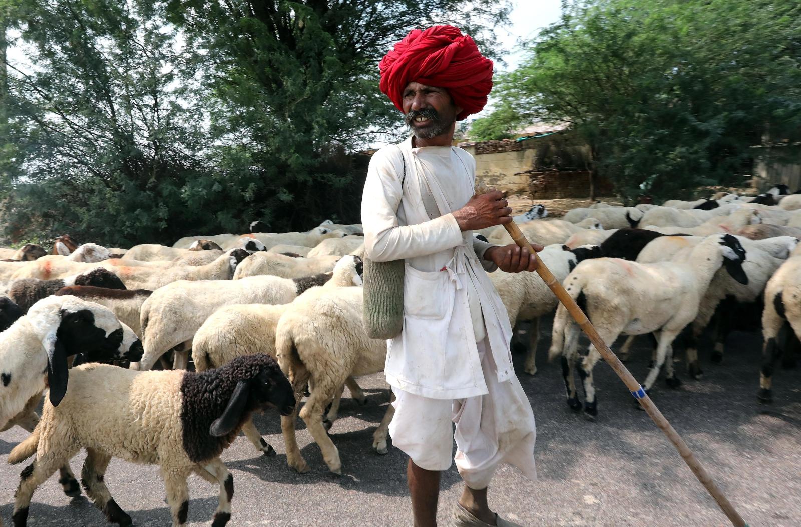 Hinduski pasterz, New Delhi