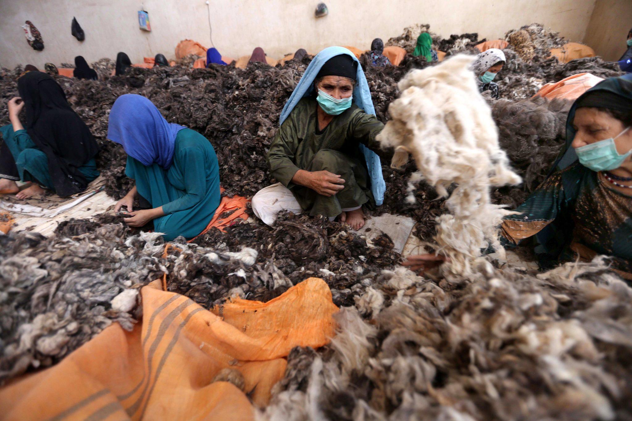 Afgańskie kobiety oddzielają futro od włosków kozich w fabryce wełny miękkiej w Afganistanie. Pracujący w tej branży zarabiają około 3 dolarów dziennie, fot: Jalil Rezayee PAP/EPA.