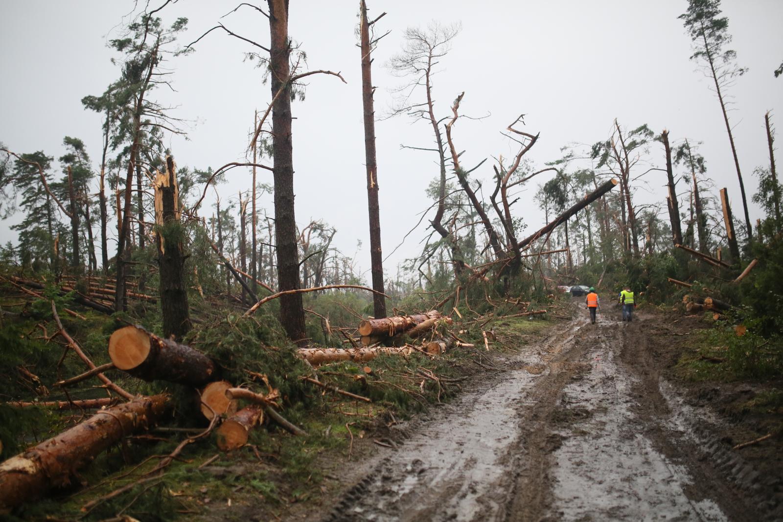 Usuwanie powalonych drzew w okolicach miejscowości Rytel.