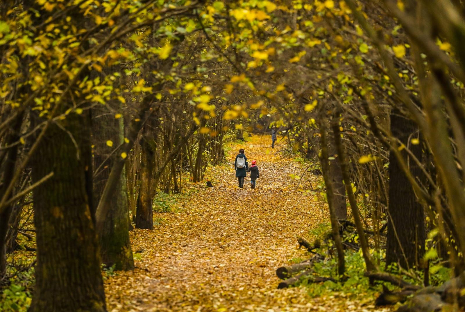 Ludzie przechadzają się wśród liści po parku Ostankino w Moskwie.