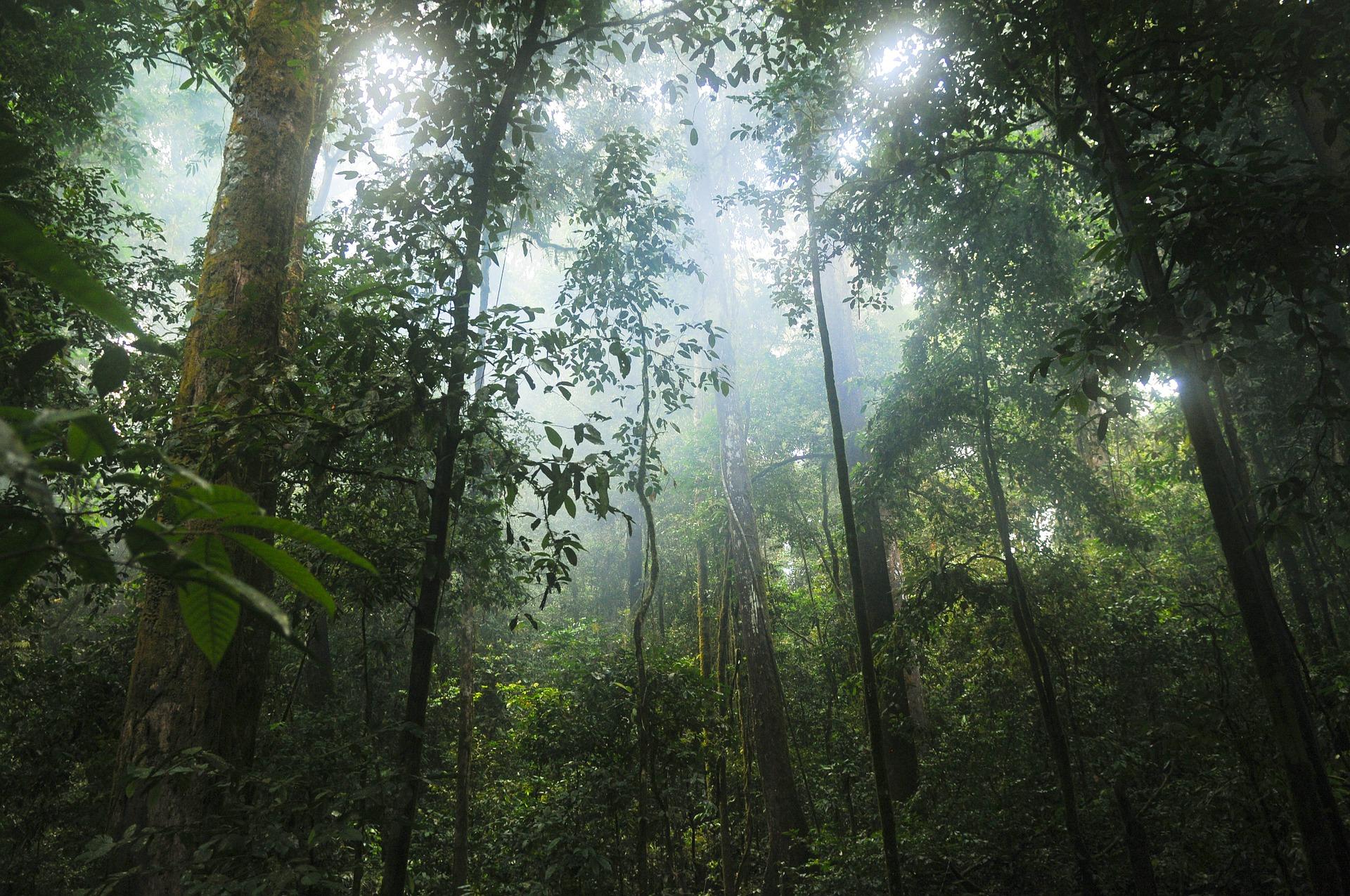 <p>Amazonia jest fascynującym miejscem. Zobacz czy znasz te zwierzęta zamieszkujące to miejsce.</p>