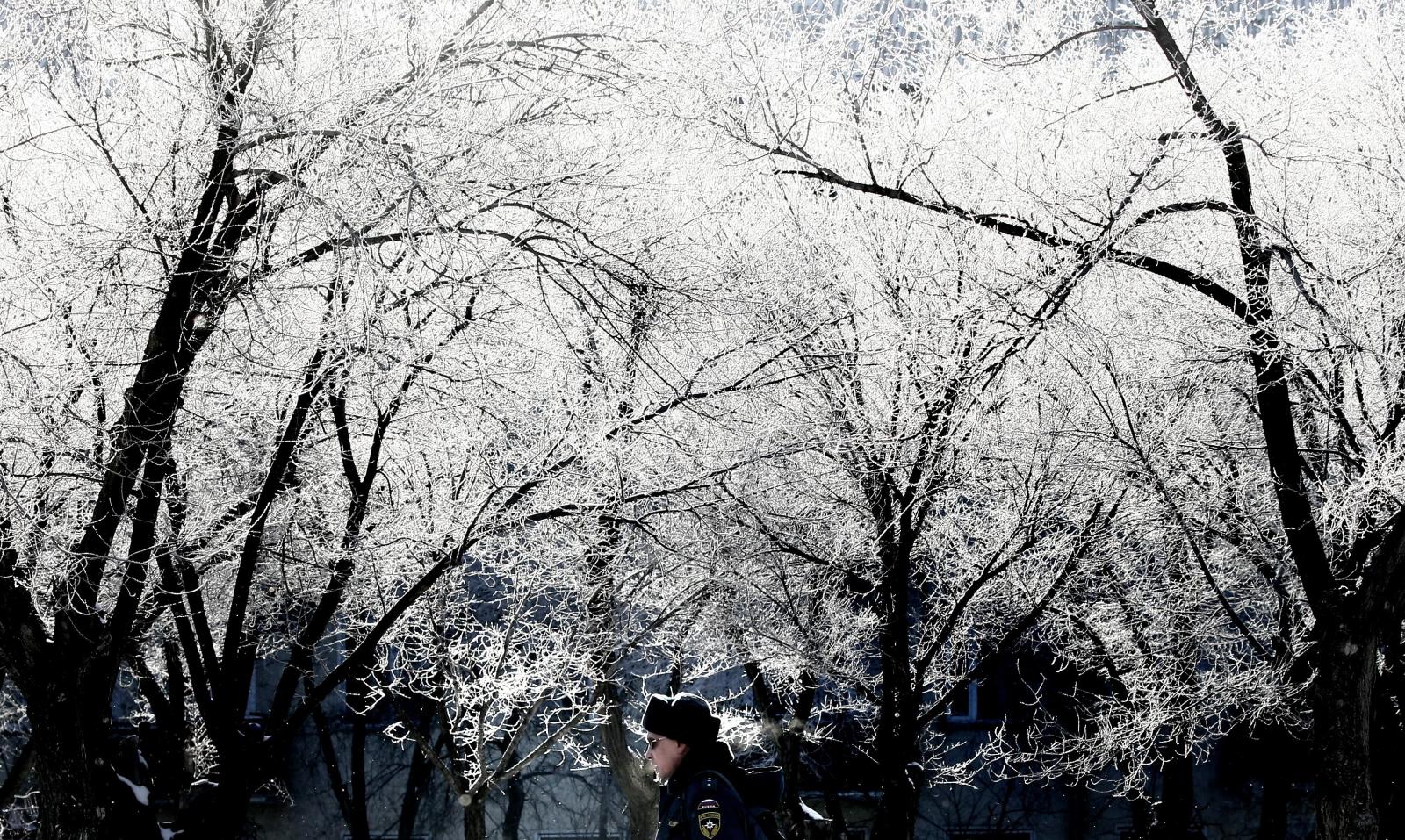 Ośnieżone drzewa w mieście Bajkonur, Kazachstan, fot. EPA/MAXIM SHIPENKOV