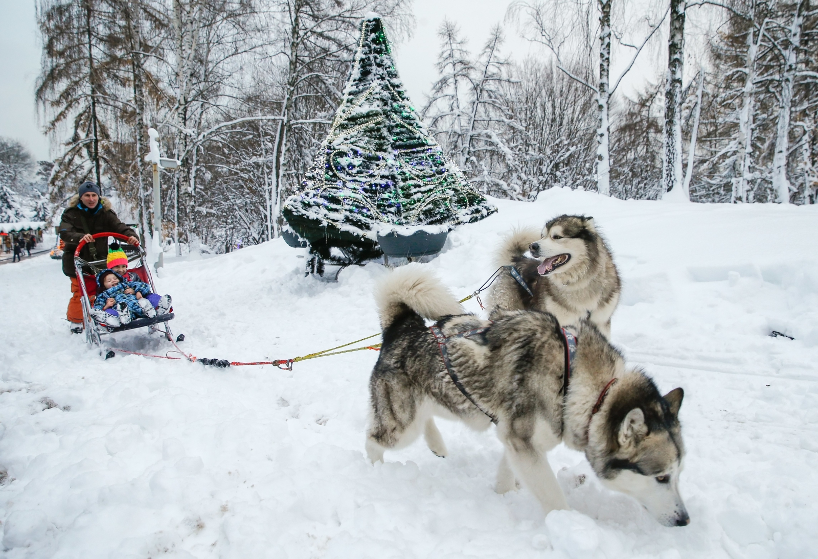 epa06401827 Ukrainians ride a dog sled during the 'Ice Age' festival in Kiev, Ukraine, 21 December 2017, as they prepare for the New Year celebration.  EPA/SERGEY DOLZHENKO Dostawca: PAP/EPA.