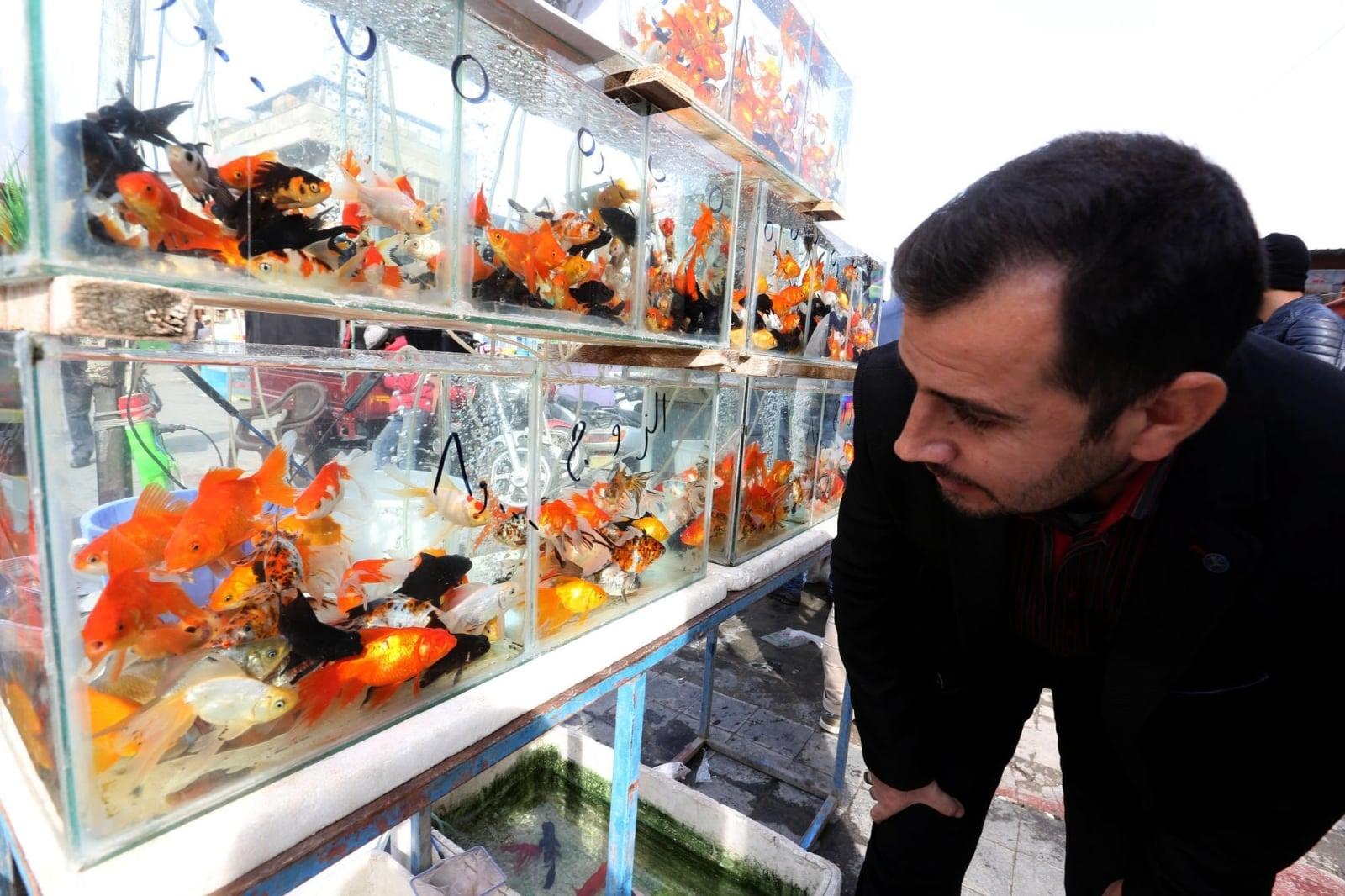 Cotygodniowye targi ptactwa i zwierząt w środkowym Bagdadzie, Irak, fot.EPA/ALI ABBAS