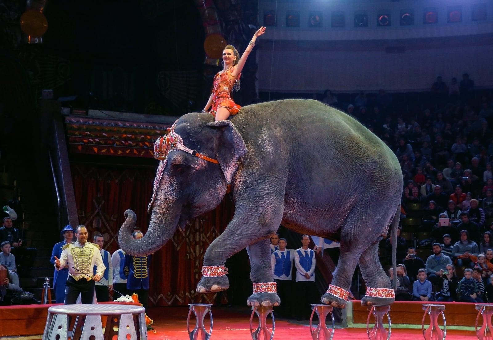 Słoń w trakcie występu w Narodowym Cyrku w Kijowie, Ukraina.