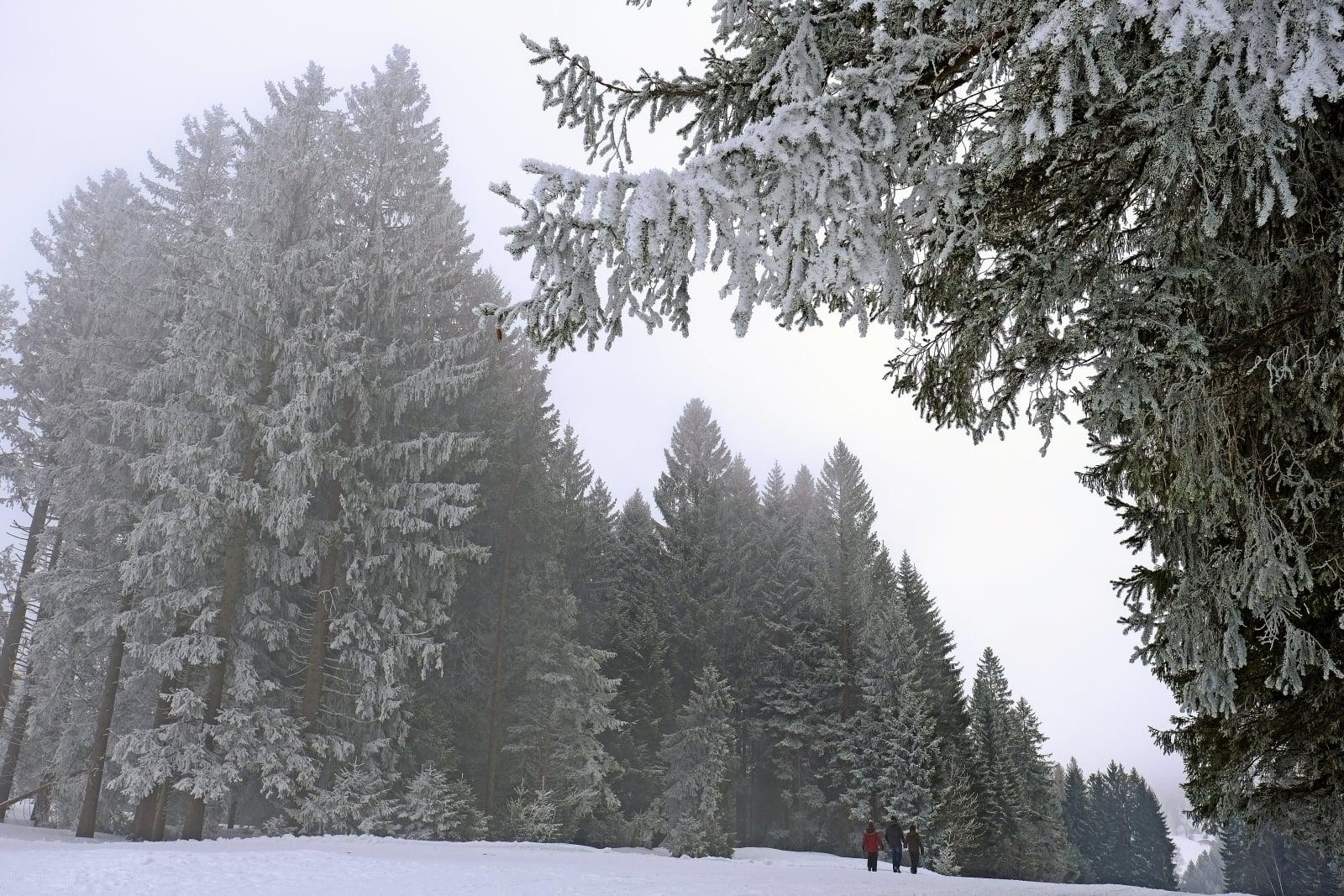 Zima w Szwajcarii. fot. EPA/WALTER BIERI