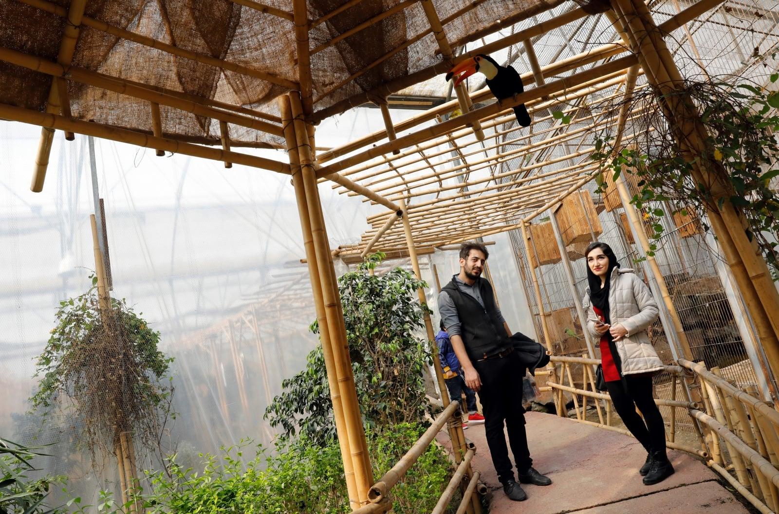 Ogród Ptaków w Iranie, fot. EPA/ABEDIN TAHERKENAREH