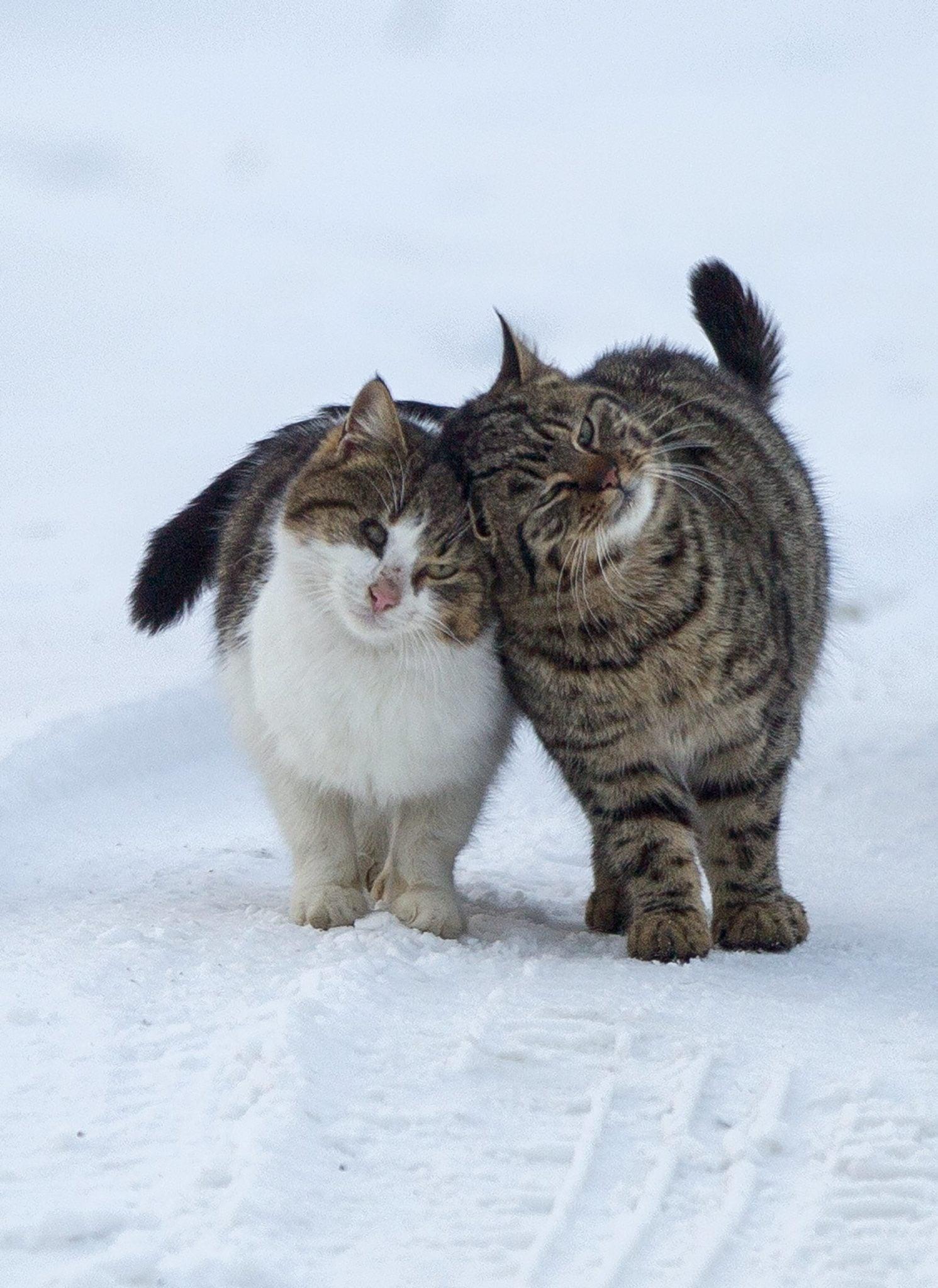 Mołdawia: dwa koty w pobliżu zamarzniętego jeziora