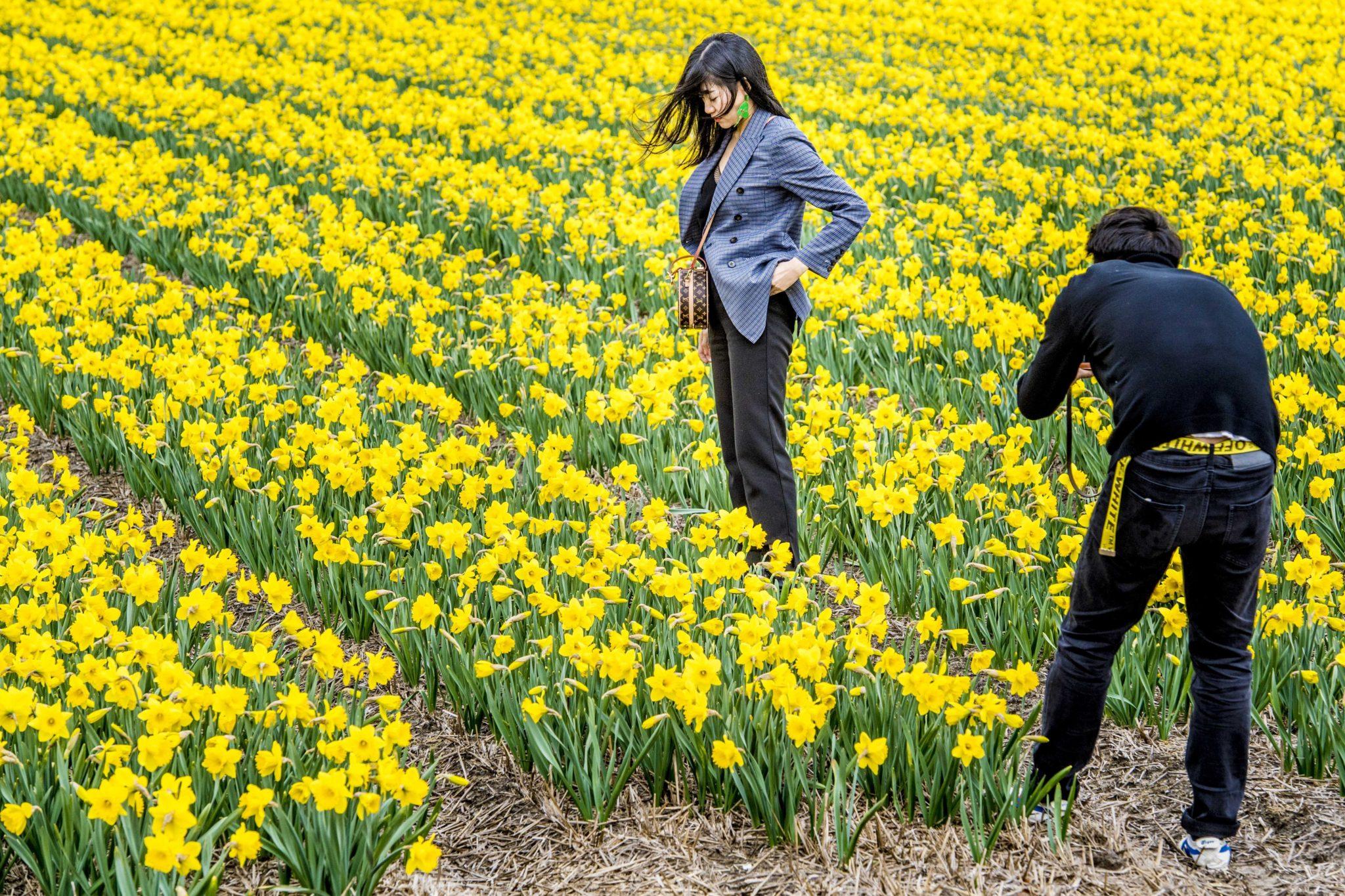 Holandia: Pole żonkili i turyści robiący zdjęcia, fot: Robin Utrecht, PAP/EPA