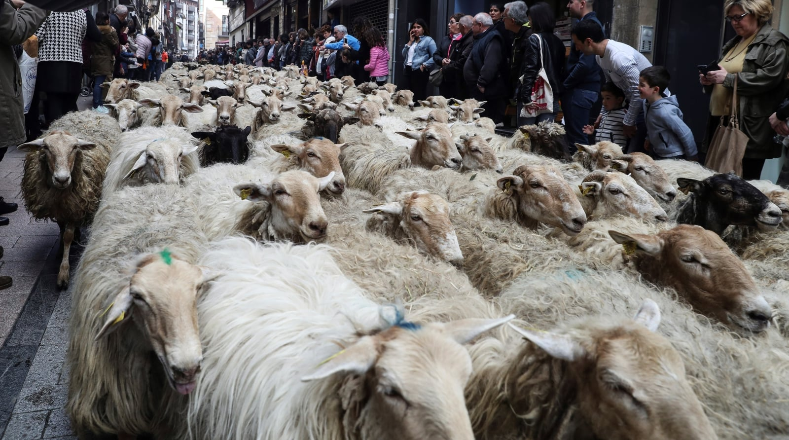 Festiwal w Kraju Basków fot. EPA/JAVIER ETXEZARRETA