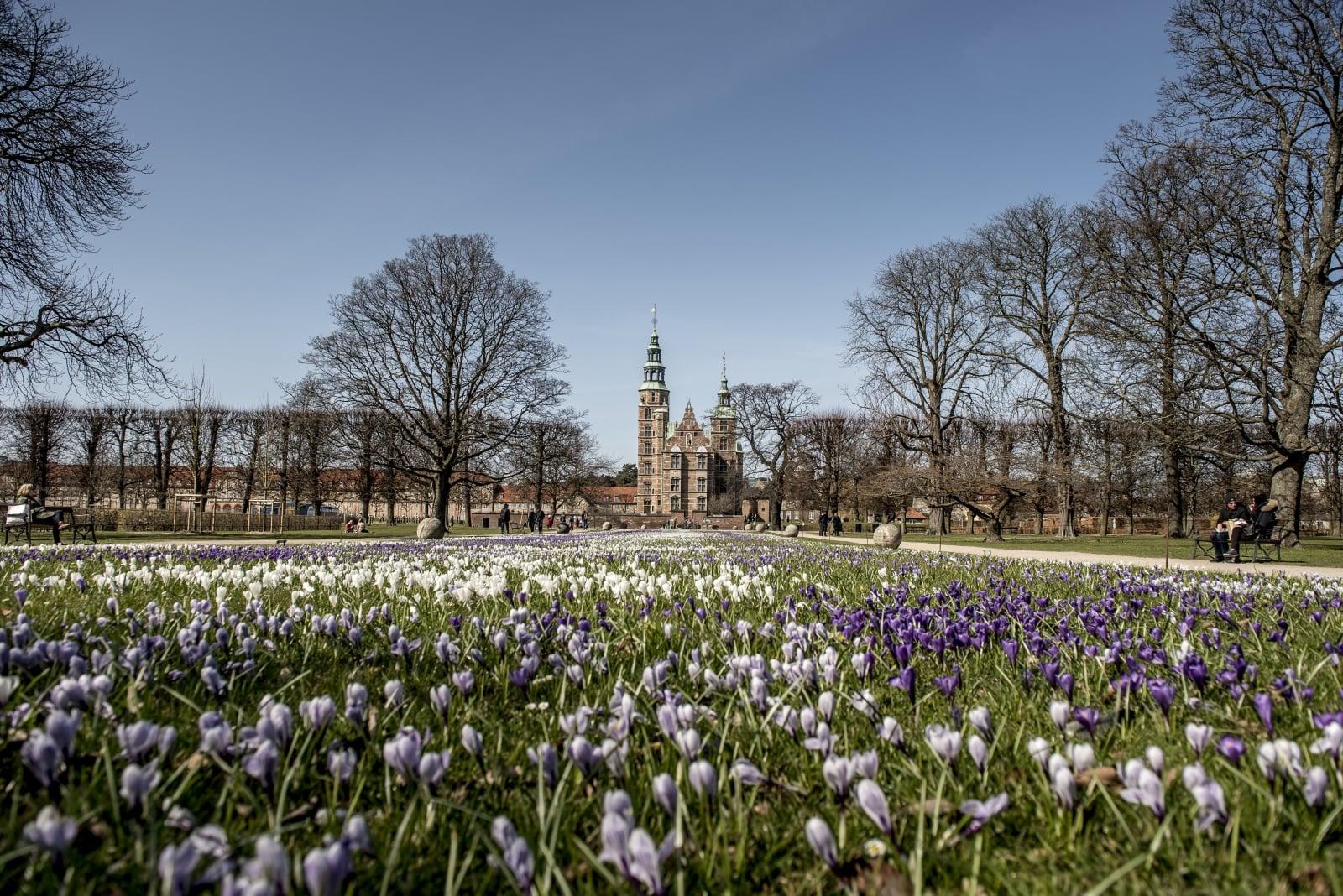 Piękne kwiaty w ogrodach Zamku Rosenborg, w Kopenhadze, Dania, fot. EPA/MADS CLAUS
