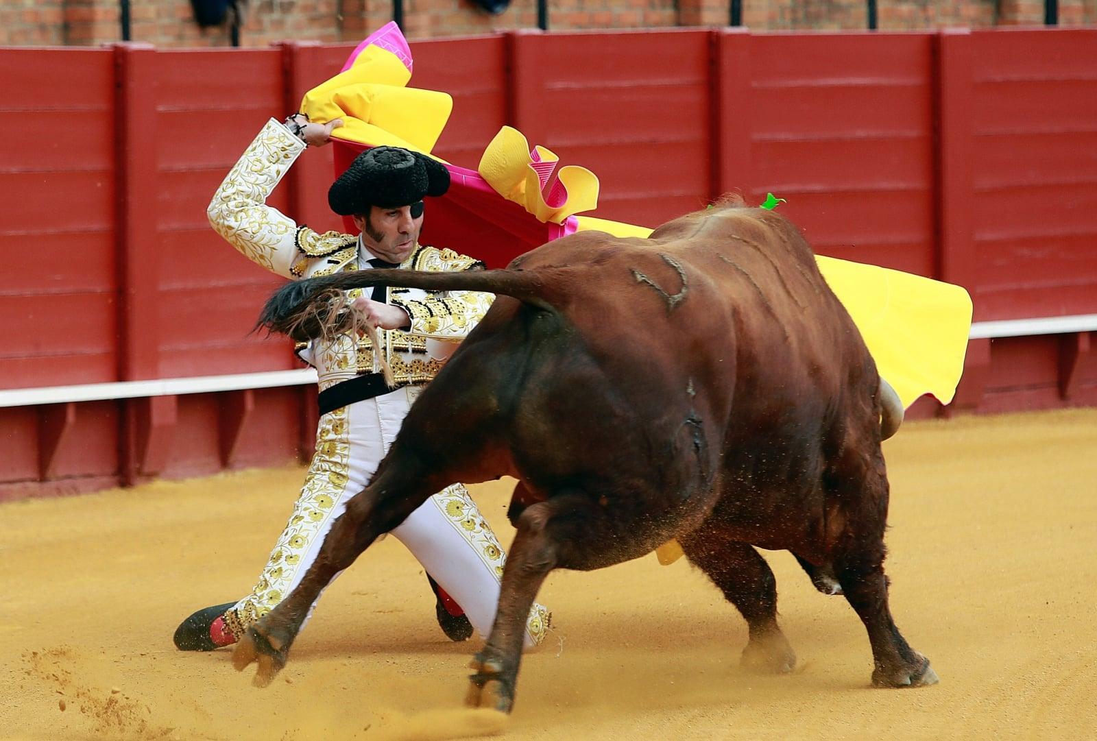Corrida w Hiszpani fot. EPA/JULIO MUNOZ
