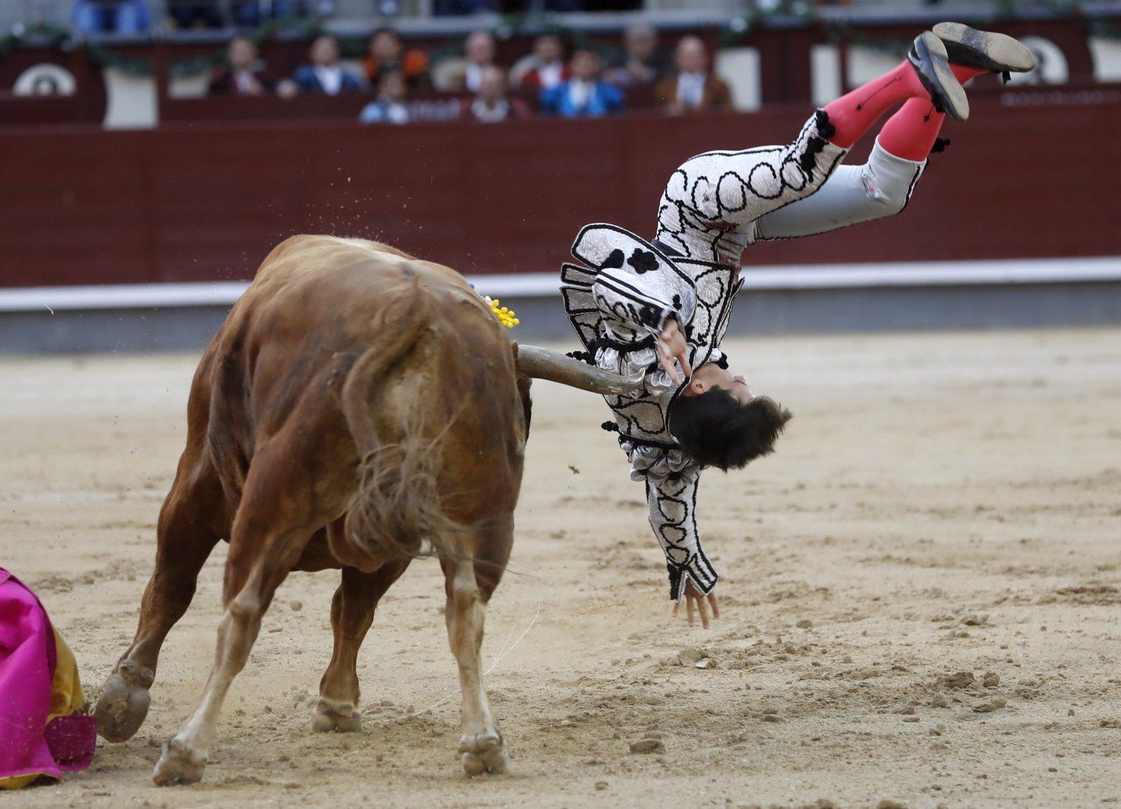 Hiszpański torreador Gonzalo Caballero w starciu z bykiem, Madryt, Hiszpania.