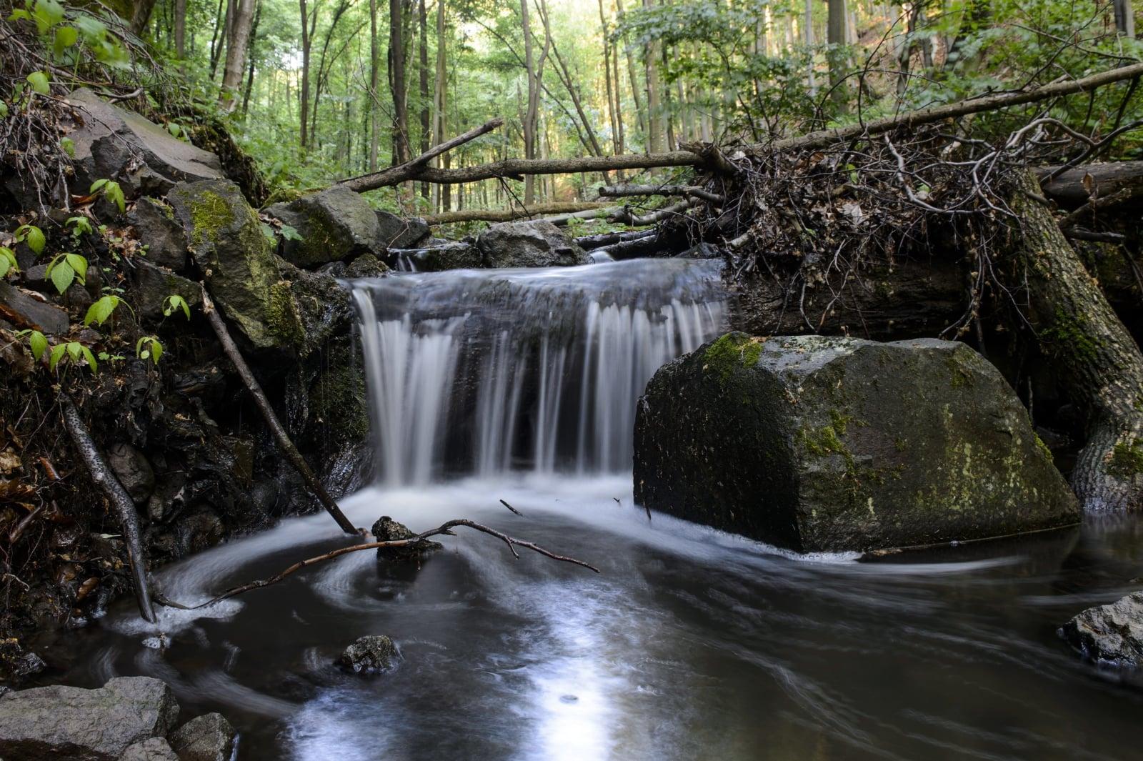Las w Parku Narodowym Bukk w pobliżu Matraszentimre, Węgry, fot. EPA/PETER KOMKA HUNGARY OUT