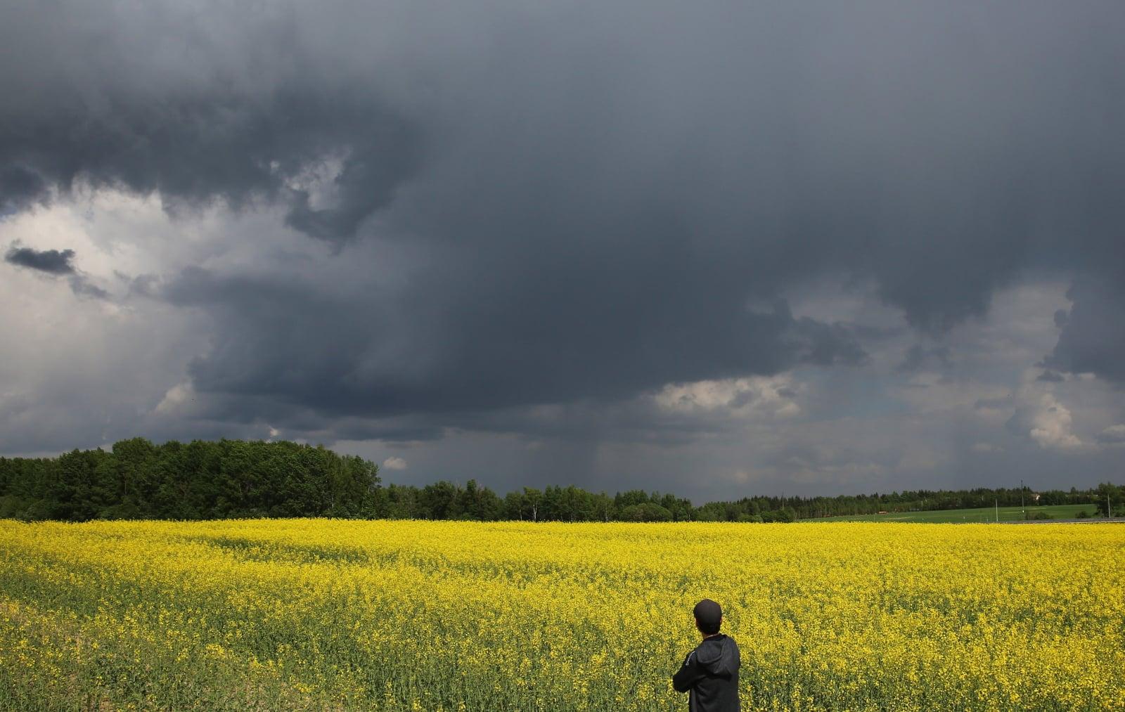 Spacer w polu rzepaku na obrzeżach Mińska, Białoruś, fot. EPA/TATYANA ZENKOVICH