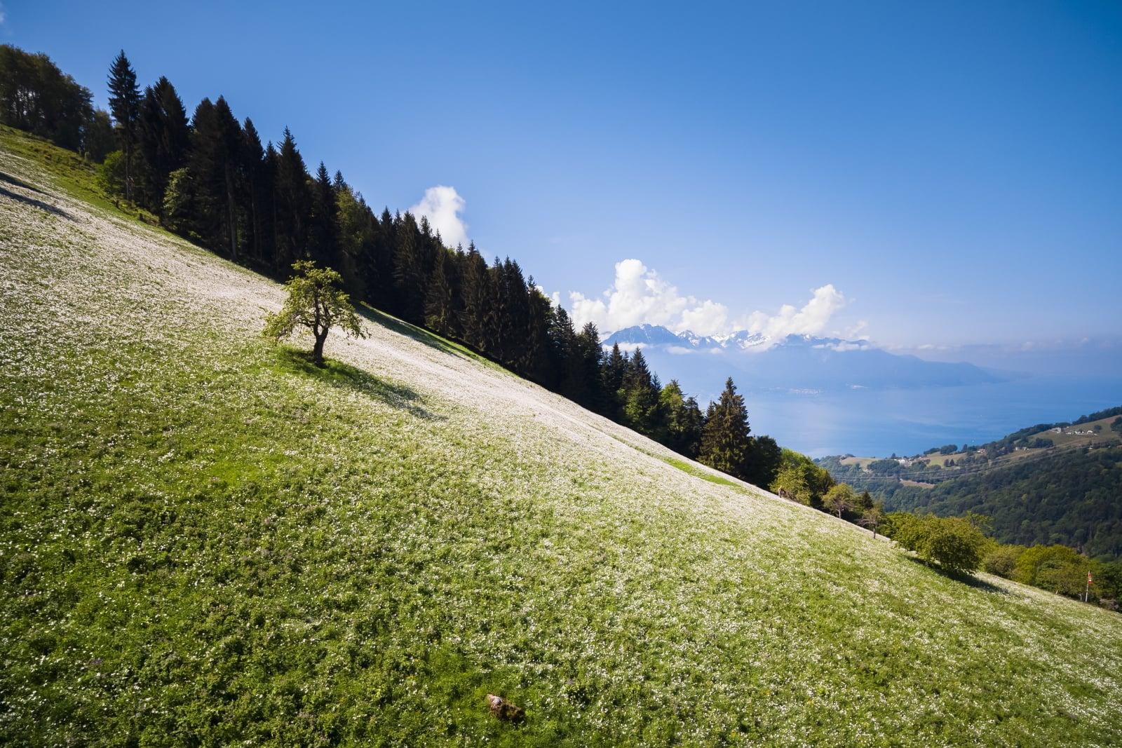 Pola pełne kwiatów, Szwajcaria, fot. PA/VALENTIN FLAURAUD