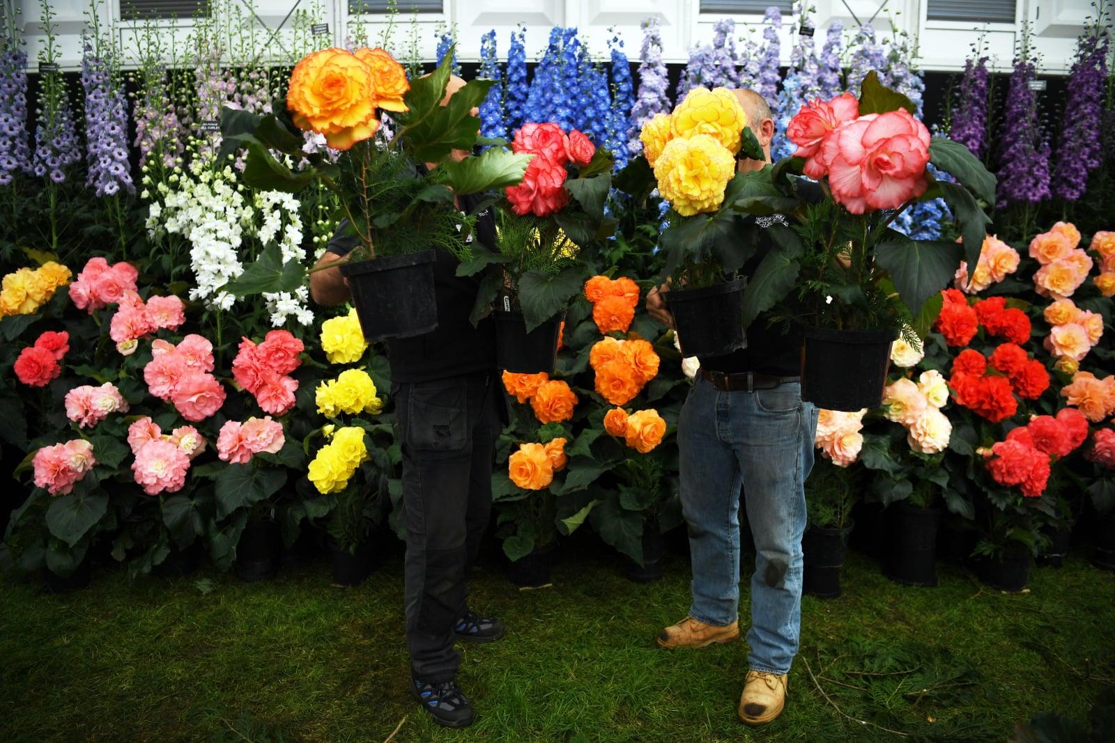 Przygotowania do wystawy ogrodowej Chelsea Flower Show w Londynie, Wielka Brytania, fot. EPA/NEIL