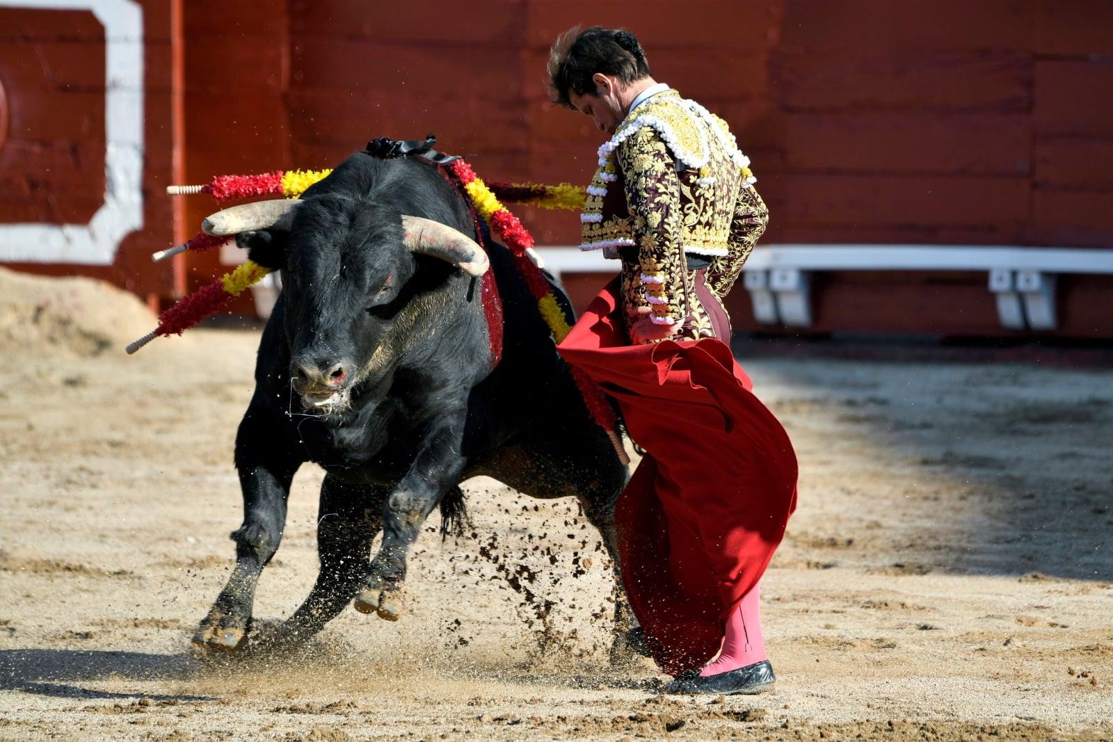 Hiszpański torreador Julian Lopez walczy z pierwszym bykiem podczas tradycyjnej walki byków w Corpus Cristi w Toledo, Hiszpania, fot. EPA/ISMAEL HERRERO