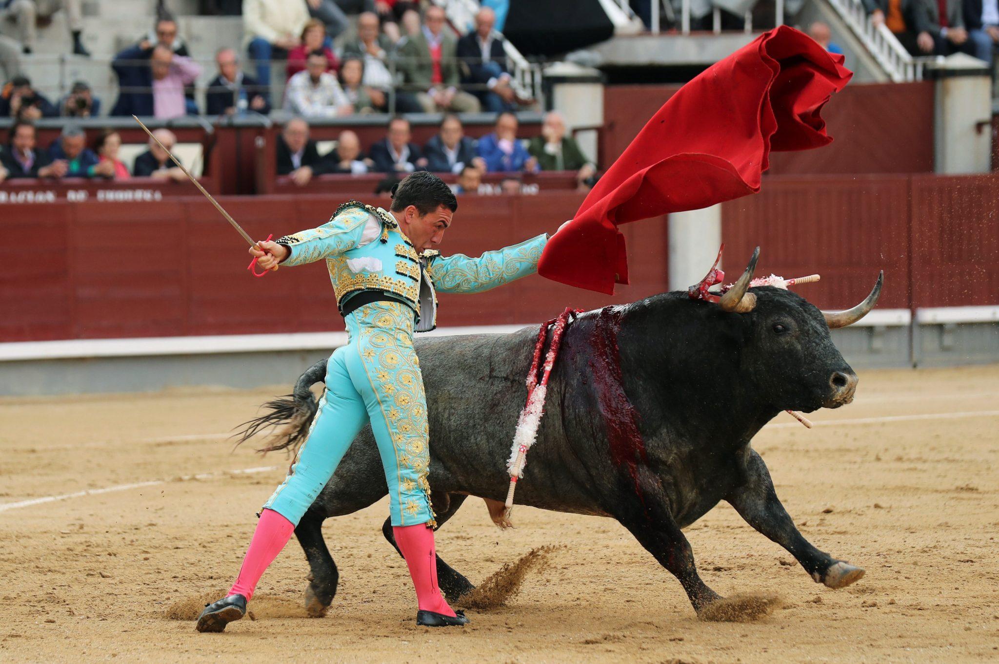Hiszpania, Madryt: torreador Octavio Chacon walczy z bykiem podczas walk byków w ramach targów Sain Isidro, na arenie walk byków Las Ventas, fot: Kiko Huesca, PAP/EPA