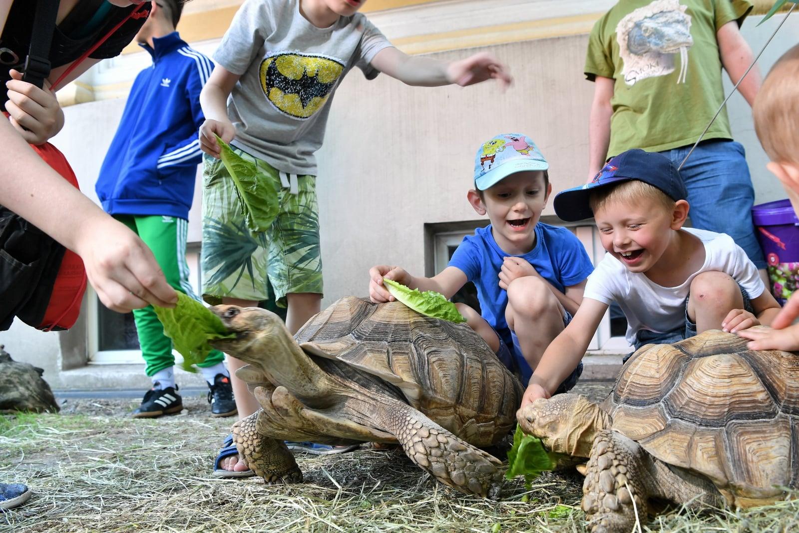 Dzieci i dorośli niepełnosprawni wzięli udział w 12. edycji Wieczoru Marzeń w zoo, 7 bm. we Wrocławiu. Niepełnosprawni uczestniczyli m.in. w pokazowych karmieniach zwierząt, a także obserwowali zwierzęta Terrarium i Afrykarium.