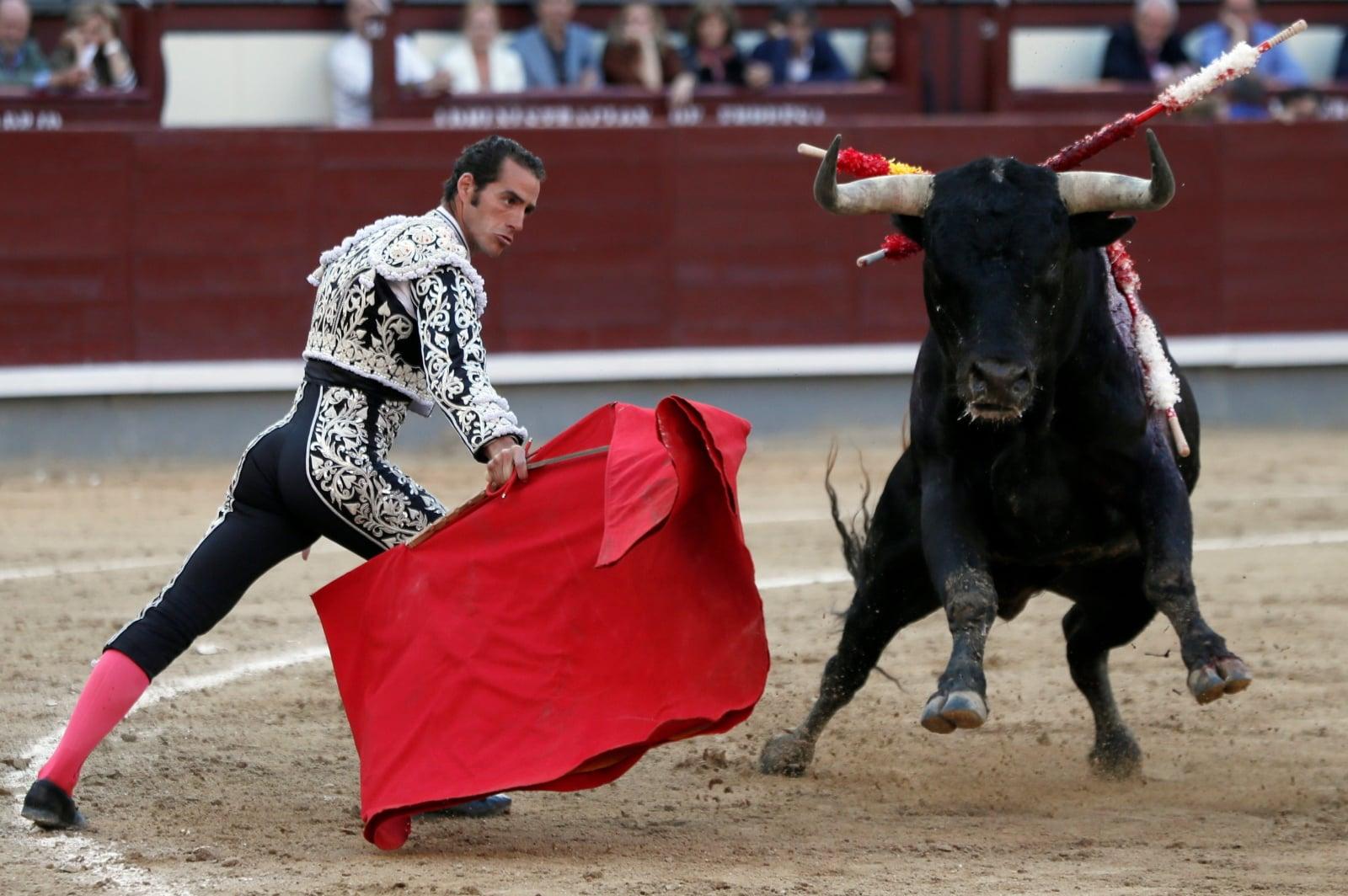 Corrida w Hiszpanii fot. EPA/FERNANDO ALVARADO