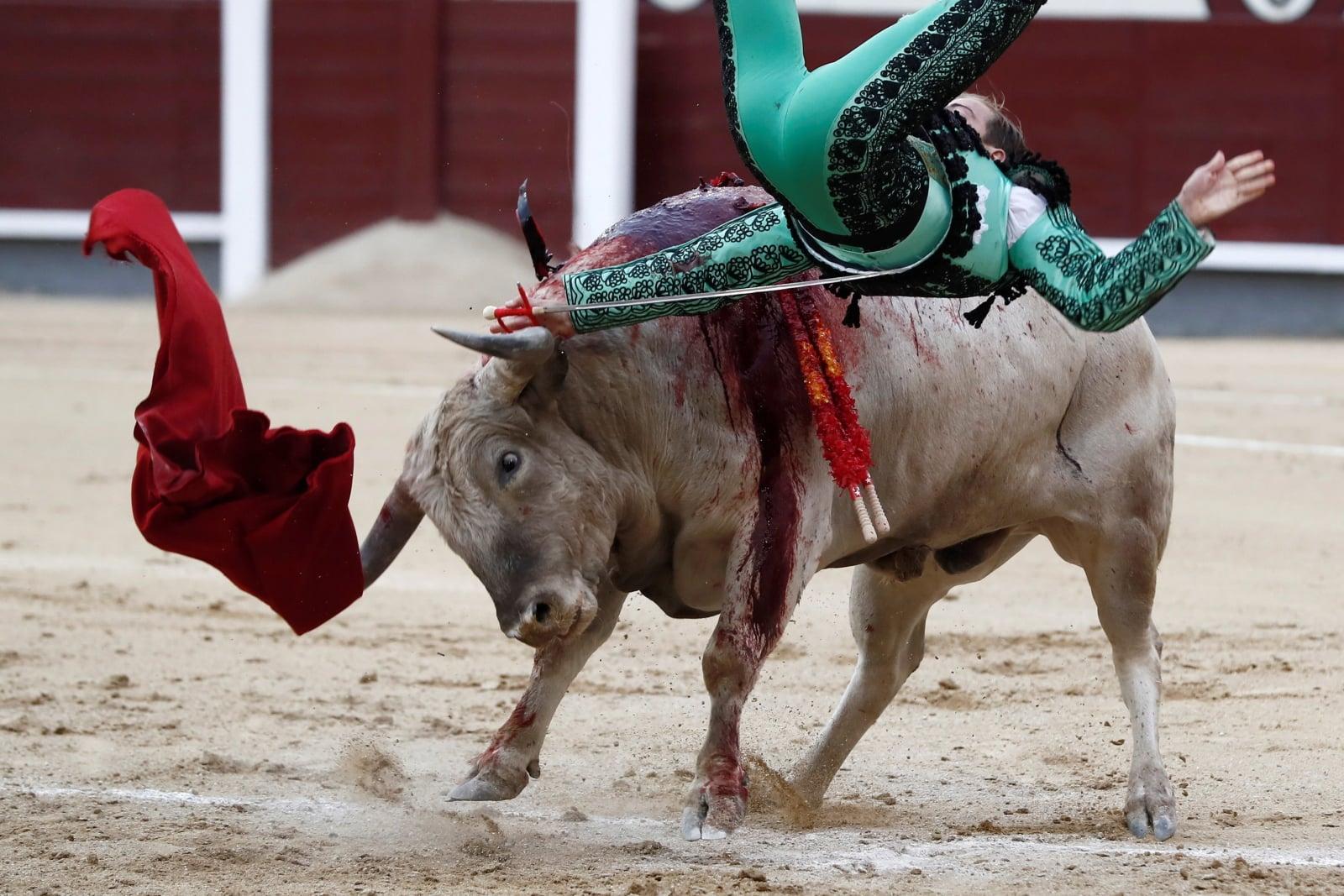 Hiszpański torreador Javier Cortes walczy z bykiem, Madryt, Hiszpania.