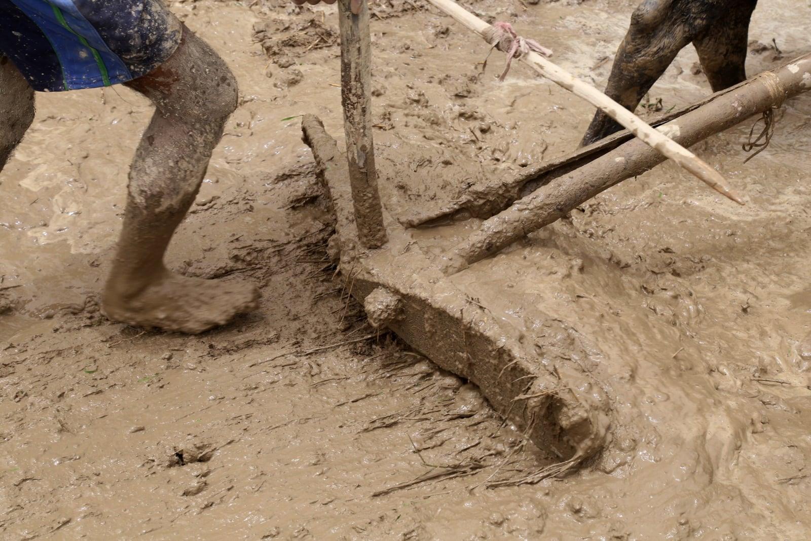 Indyjski sposób uprawy ziemi fot. EPA/SANJAY BAID Dostawca: PAP/EPA.