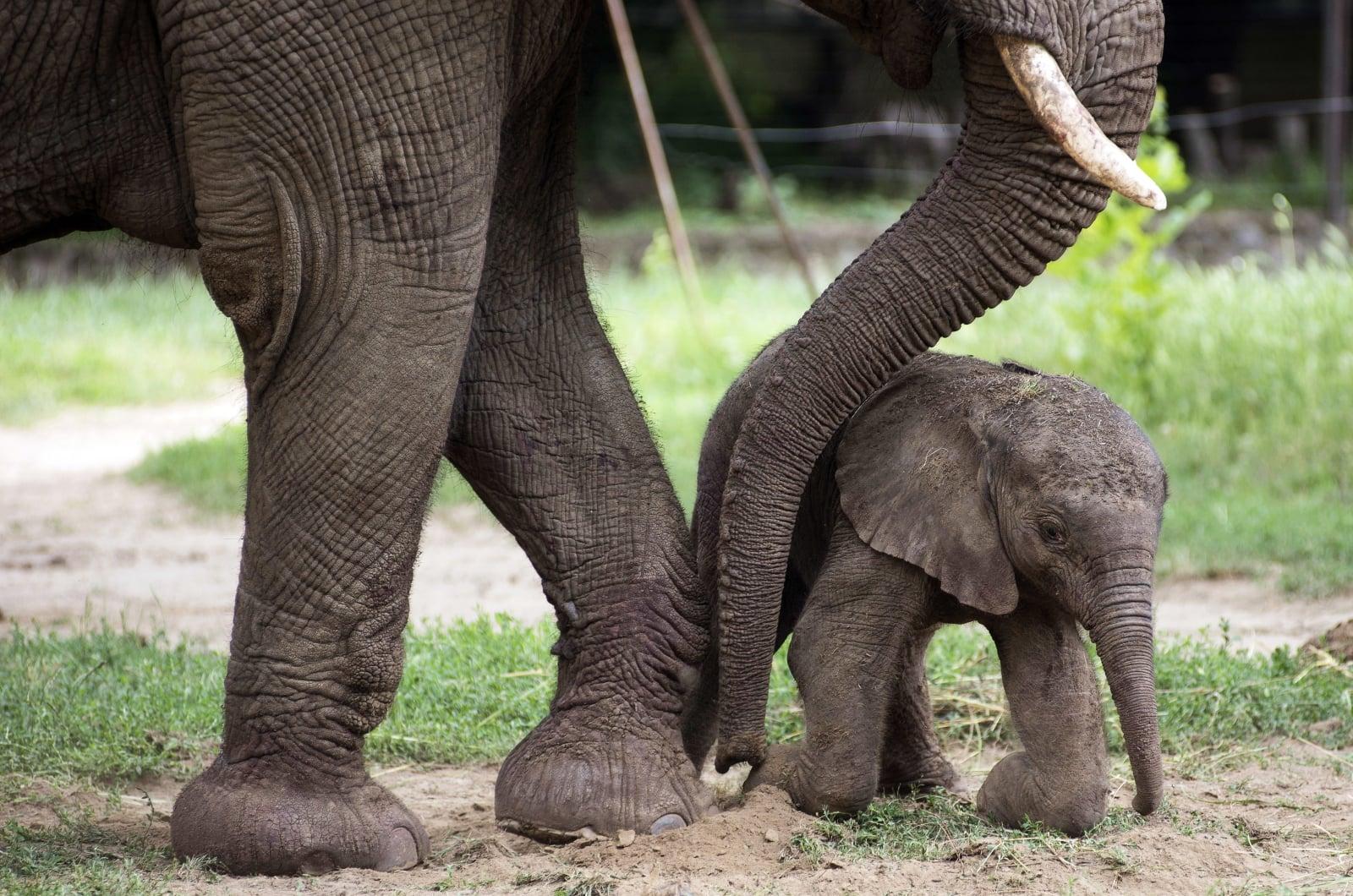 Węgierskie słonie fot. EPA/ATTILA BALAZS