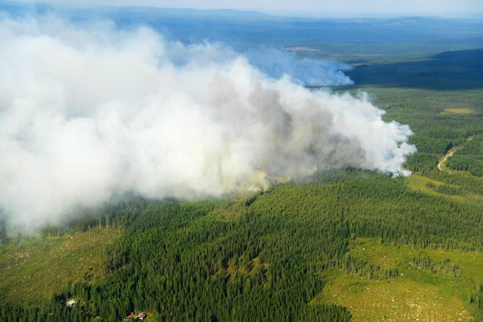 Pożar lasów w Szwecji  EPA/Maja Suslin